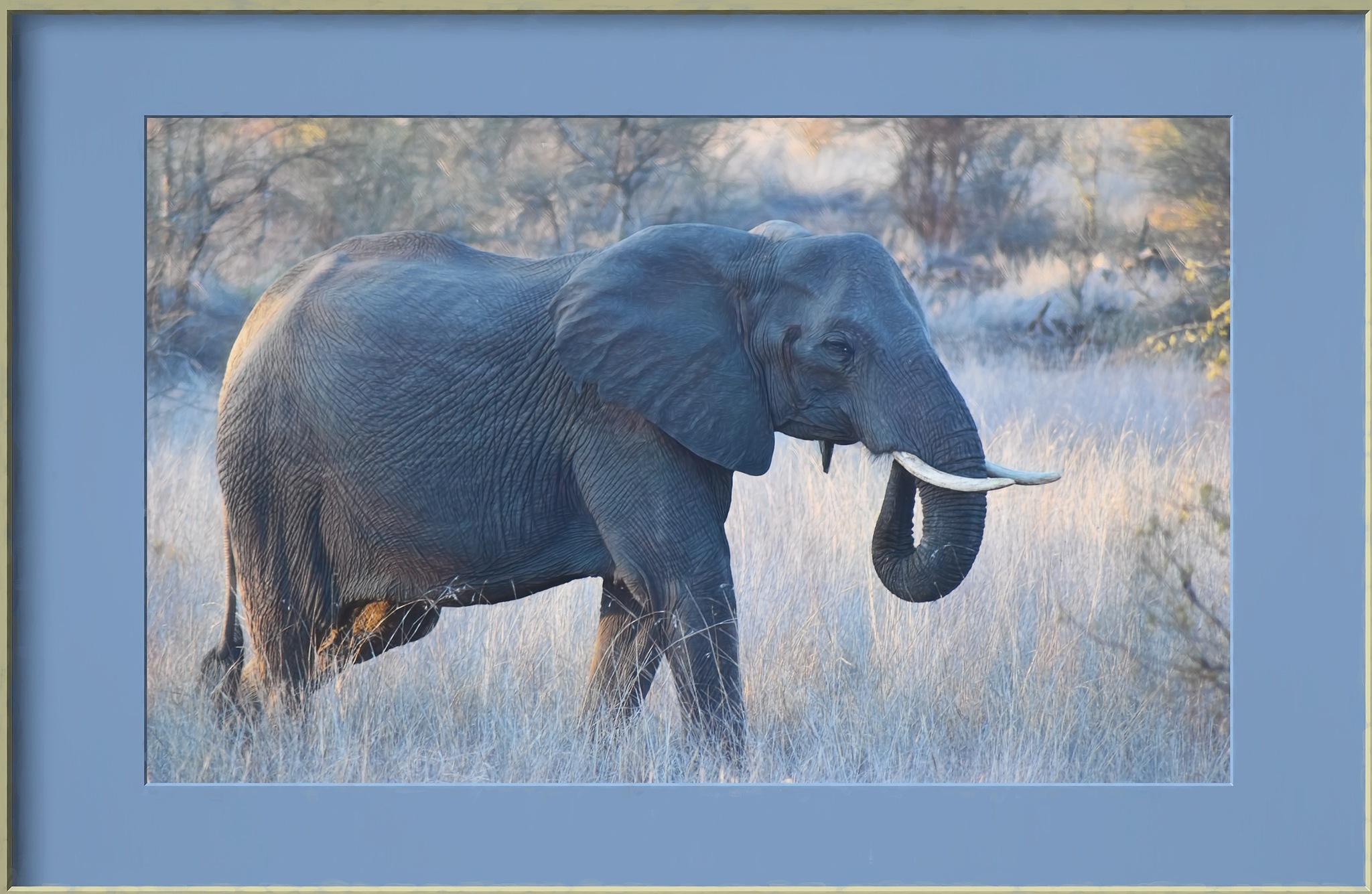 African Elephant by jammiejam