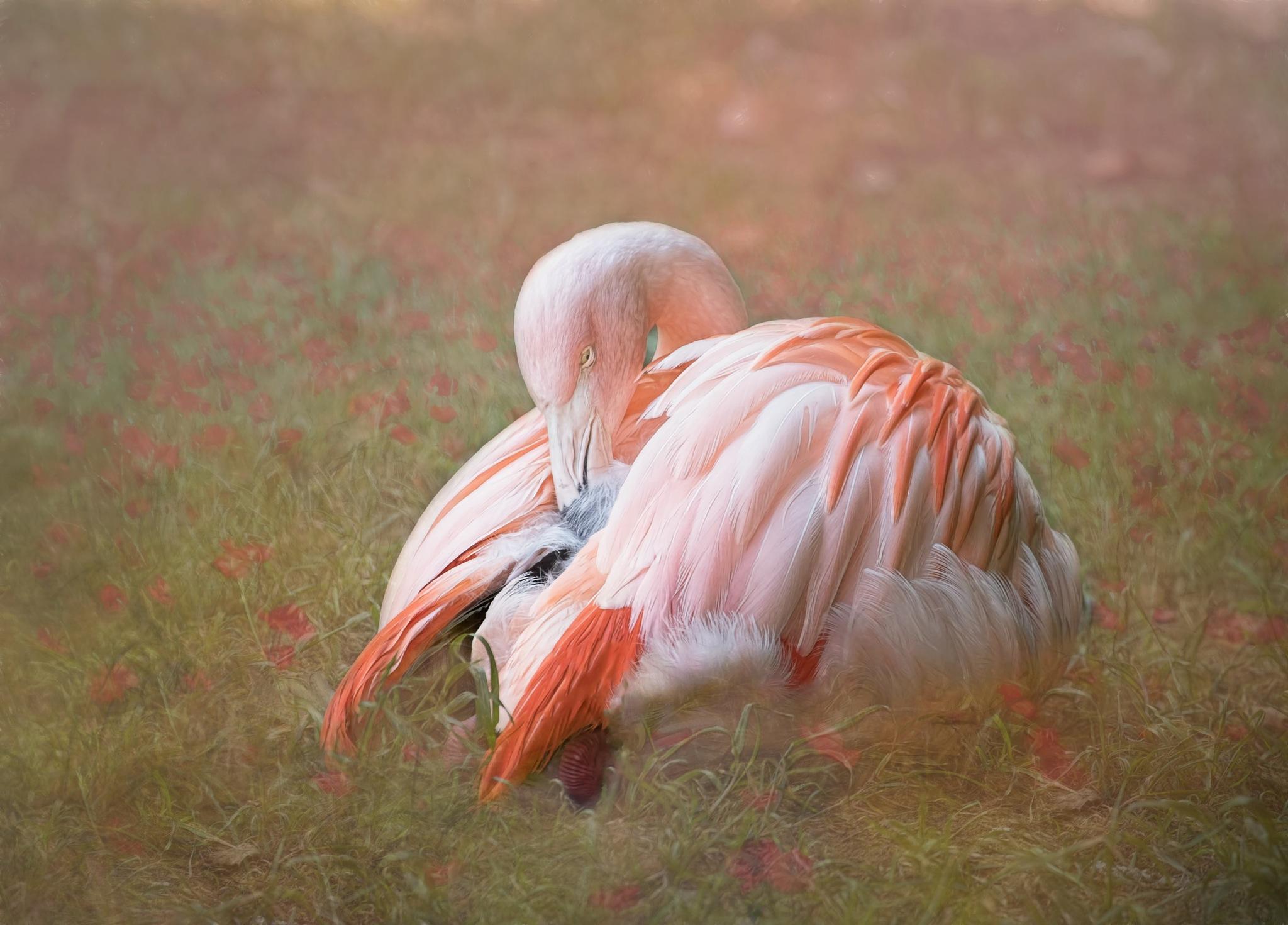 Flamingo by jammiejam