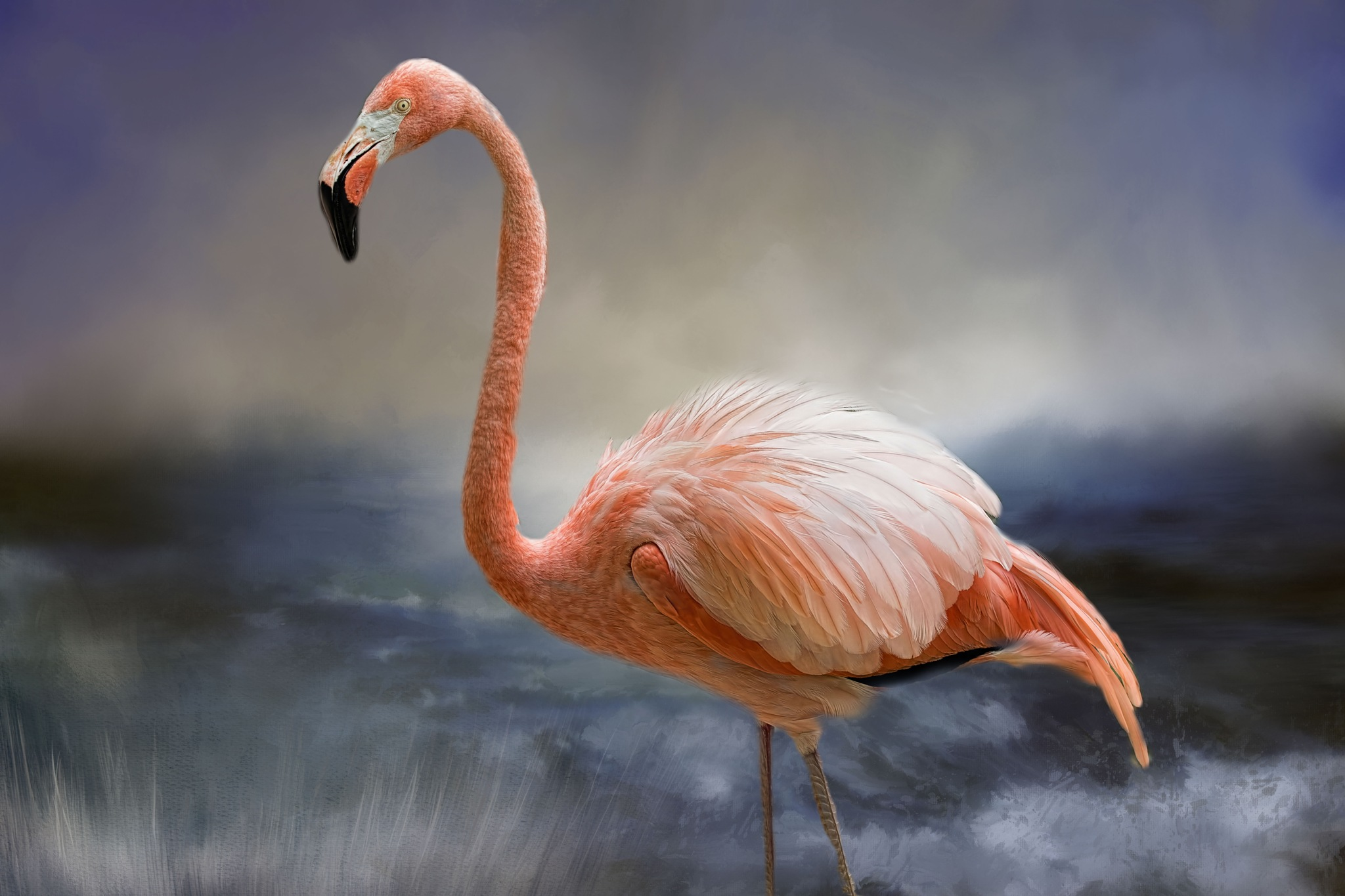 Flamingo by jammiejam