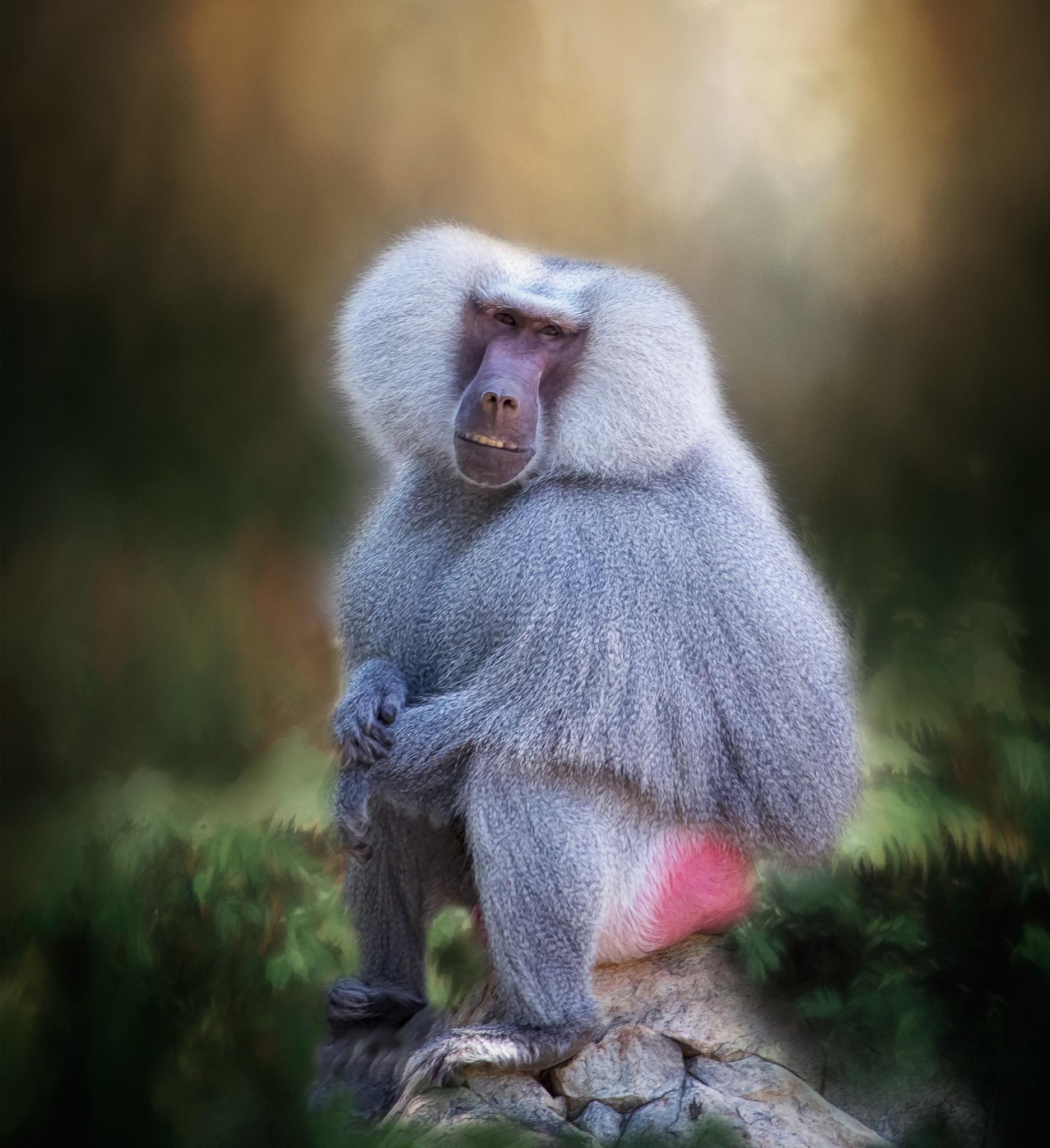 Primate by jammiejam
