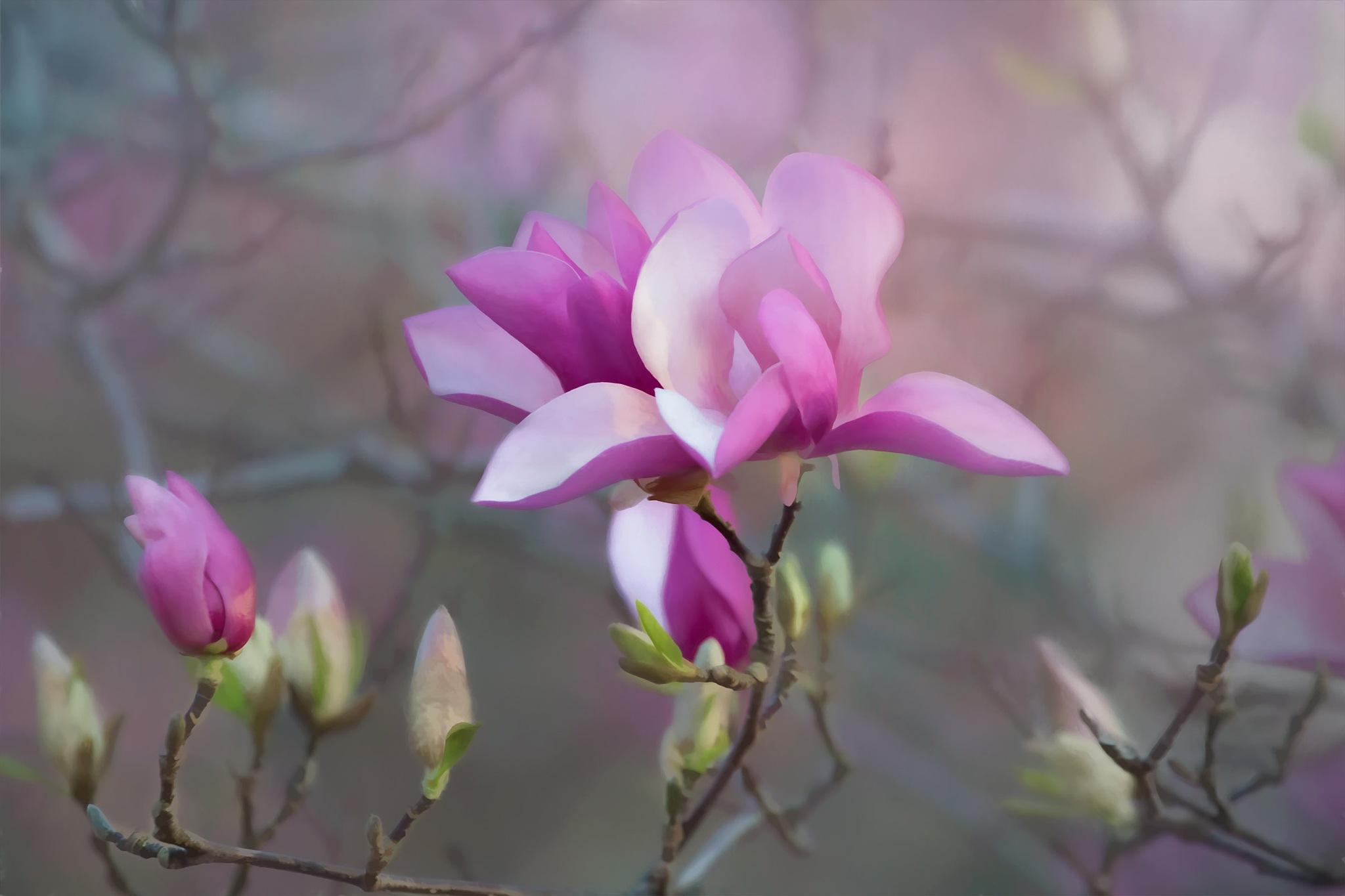 Tulip Tree by jammiejam