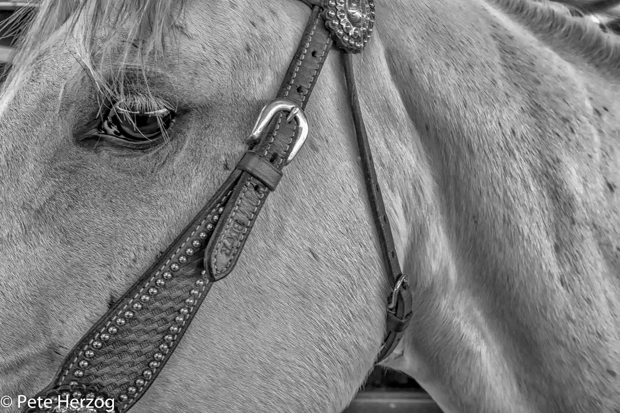 Horse Close up by peter.herzog.3323