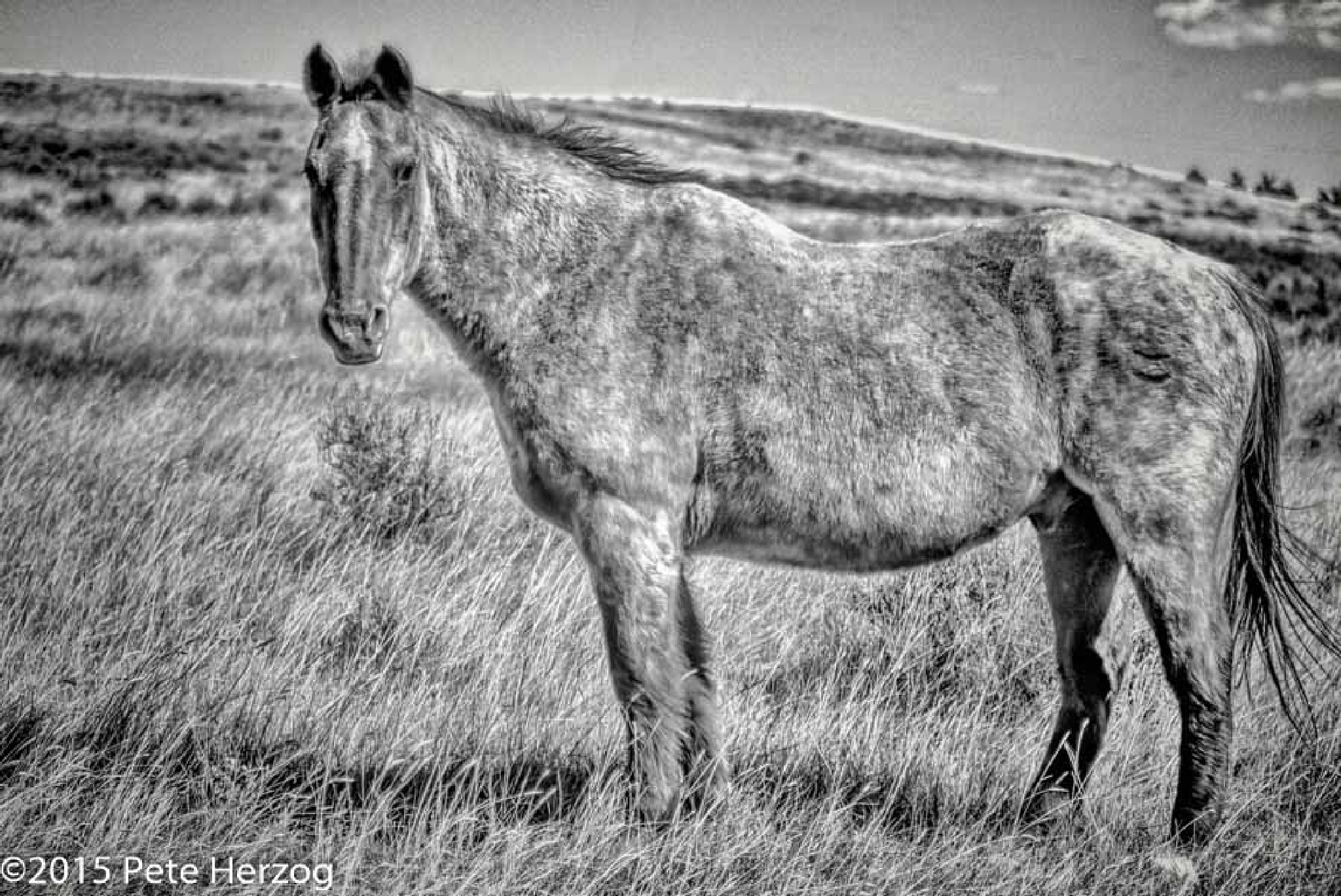 Horse on the Range by peter.herzog.3323