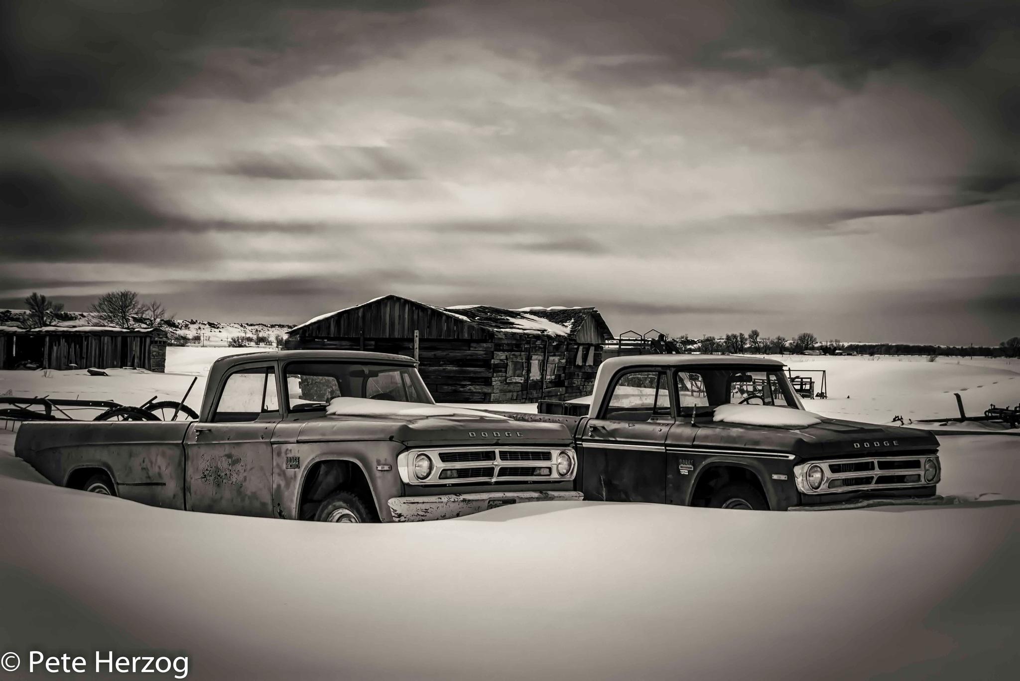 Dodge Pickups in Snow by peter.herzog.3323