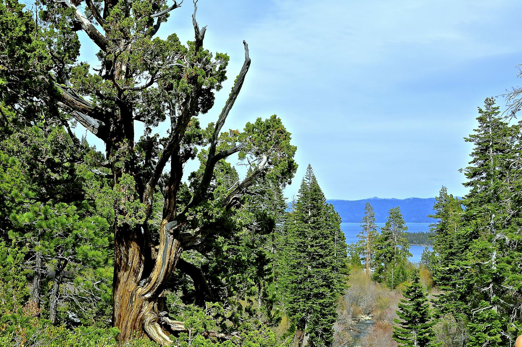 Lake Tahoe, Californa by Robert Ou