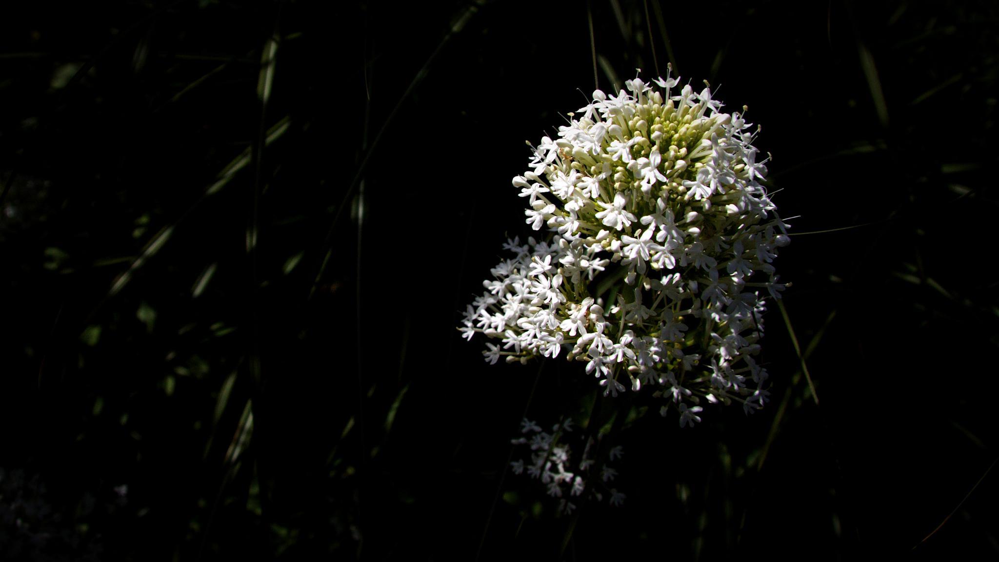 Just A Photograph 266 by Dorian Stretton
