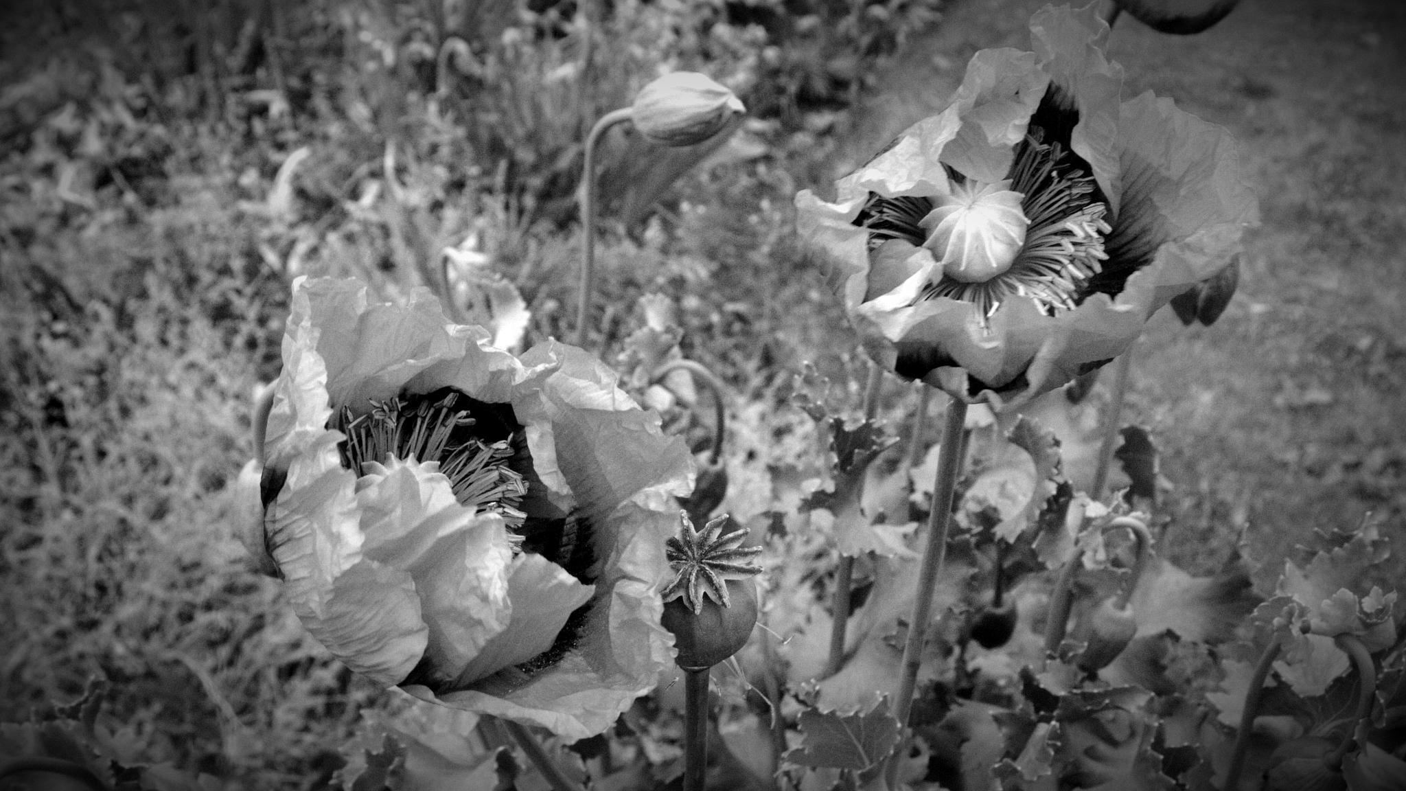 Just A Photograph 234 by Dorian Stretton