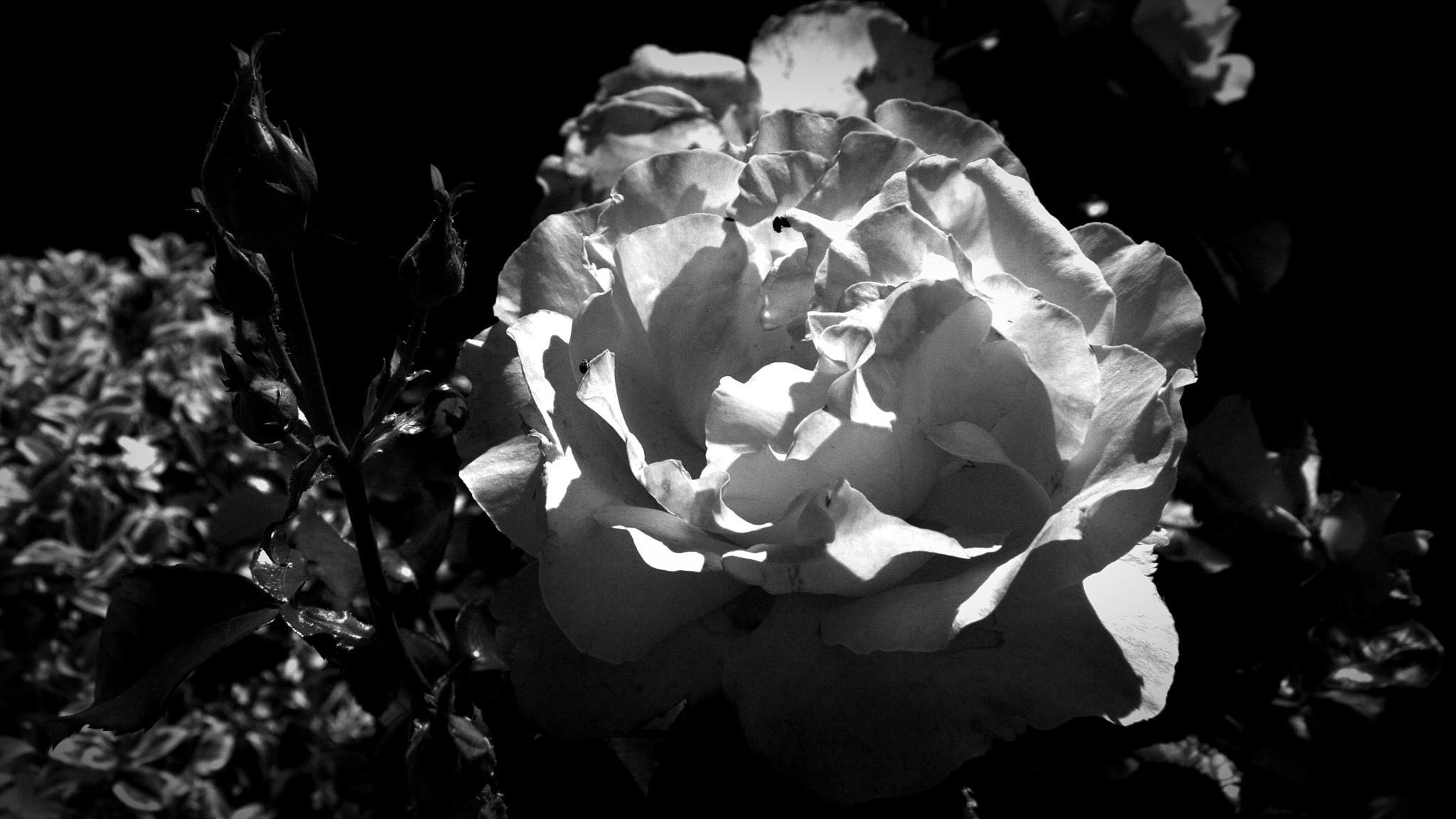 Just A Photograph 353 by Dorian Stretton