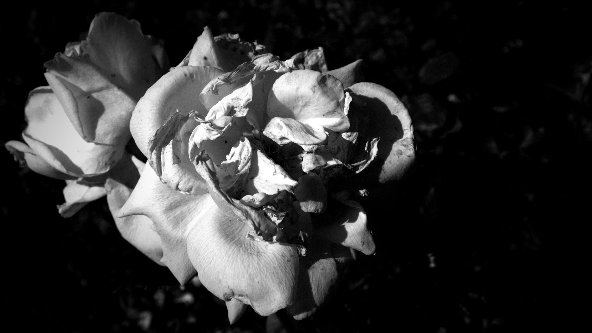 Just A Photograph 373 by Dorian Stretton