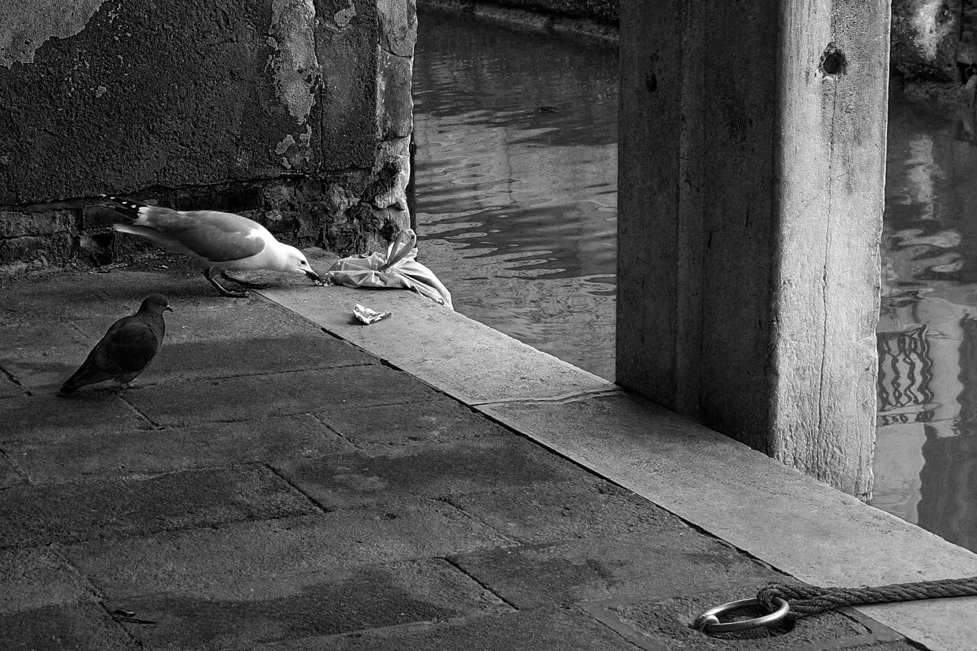 Waiting his turn by Sergio Deggiovanni
