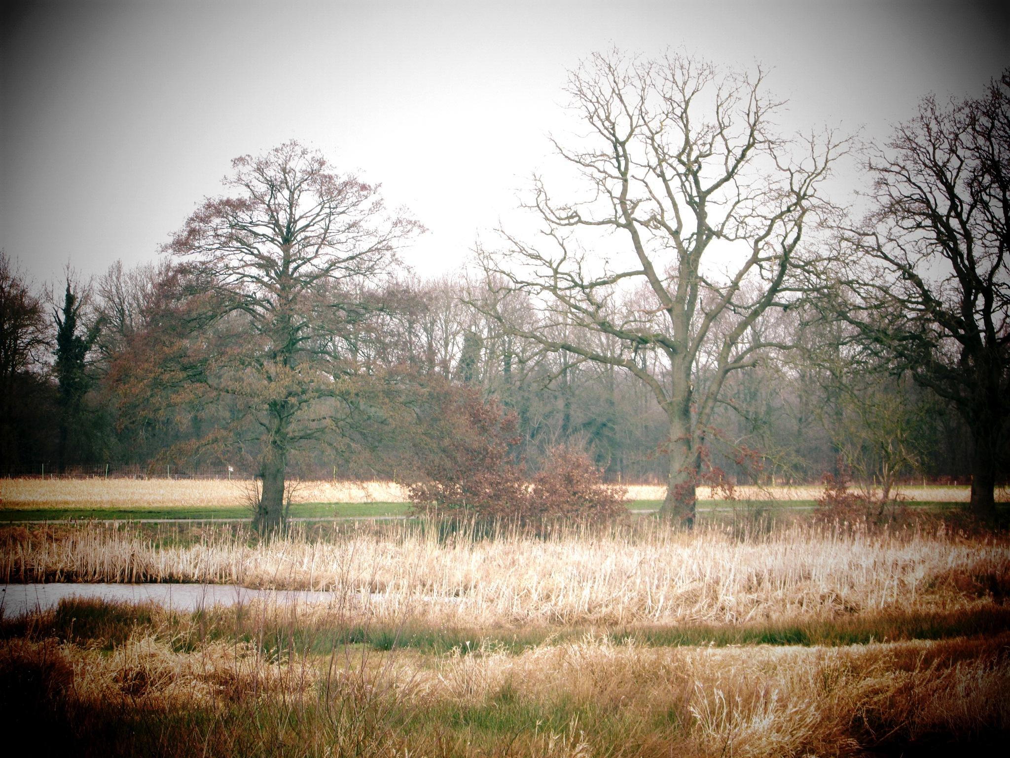 landscape 6 by gineke.sterenborg