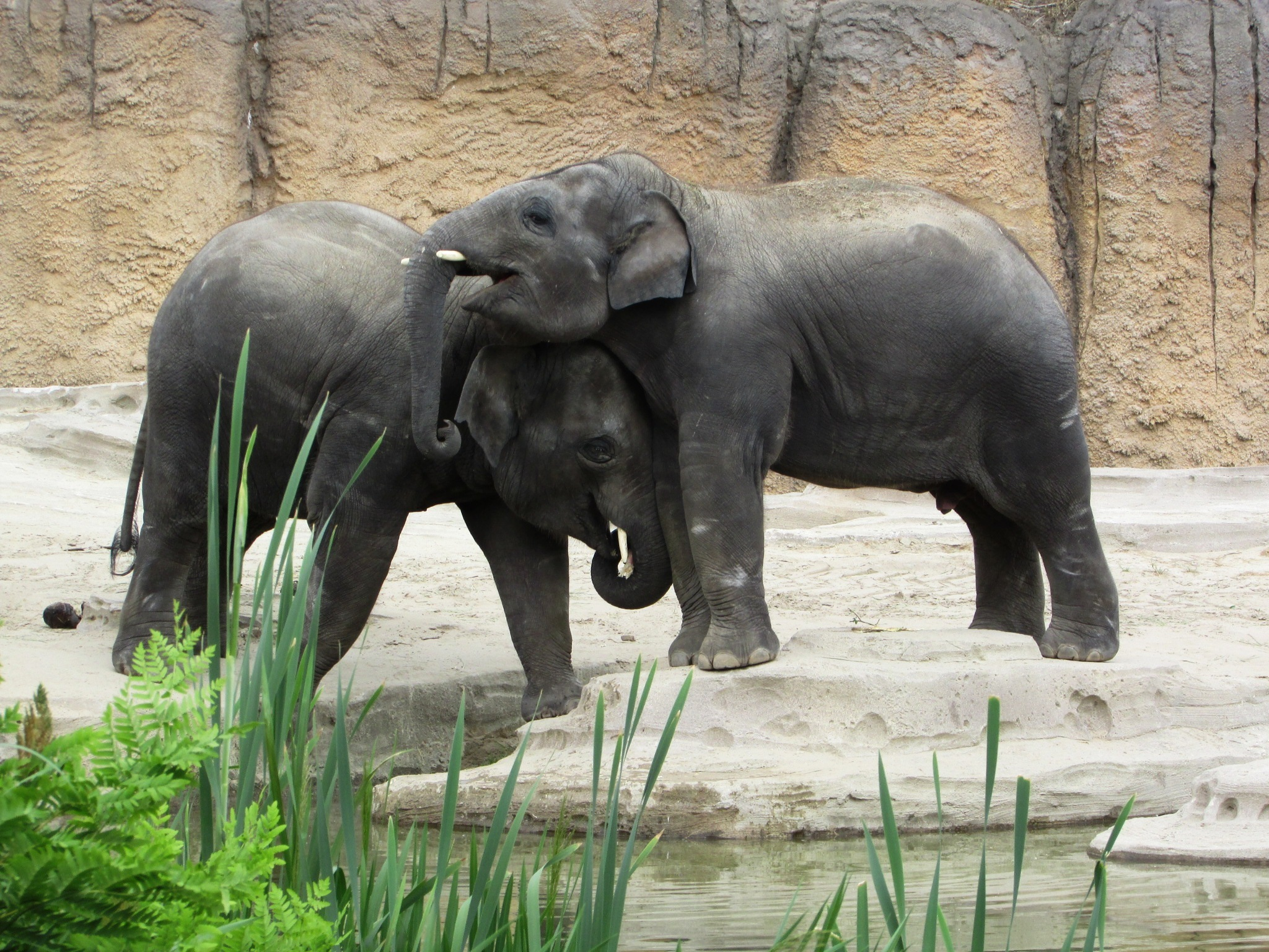 baby elephants playing with each other by gineke.sterenborg