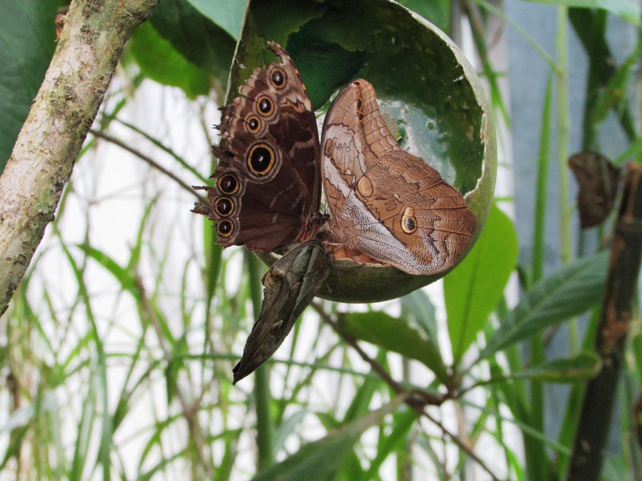 african butterflies by gineke.sterenborg
