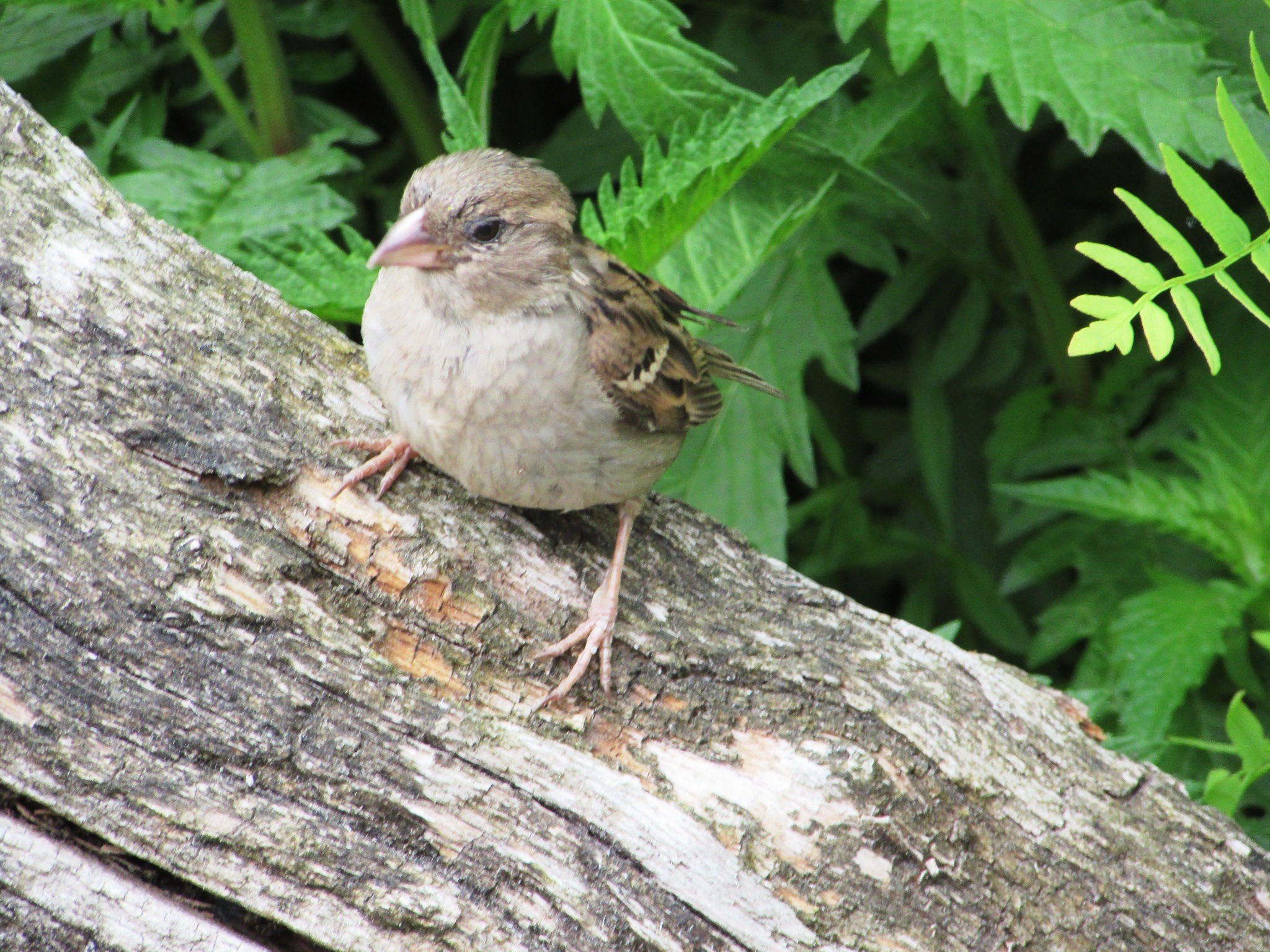sparrow visiting the zoo by gineke.sterenborg