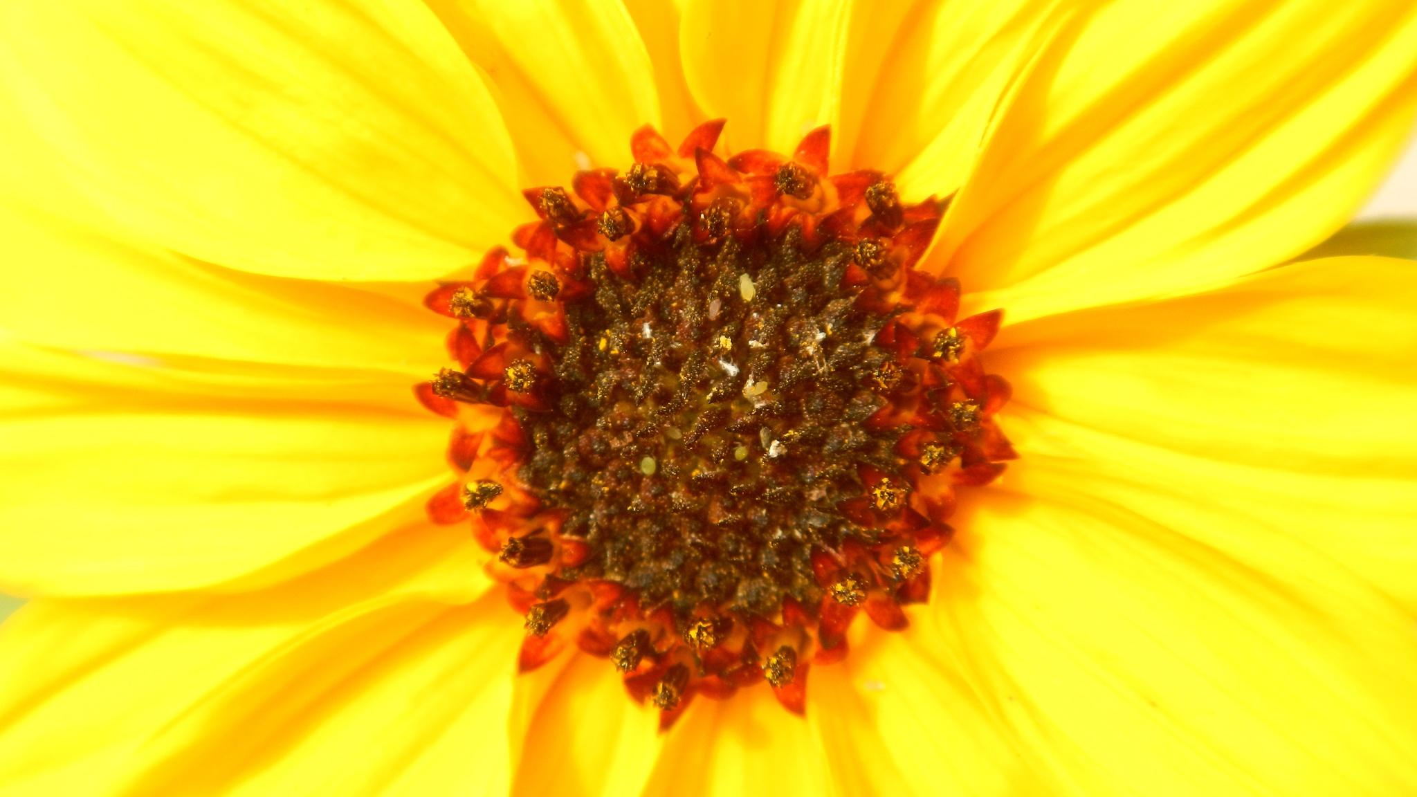 I am yellow by अनूप यादव (pixelzz)