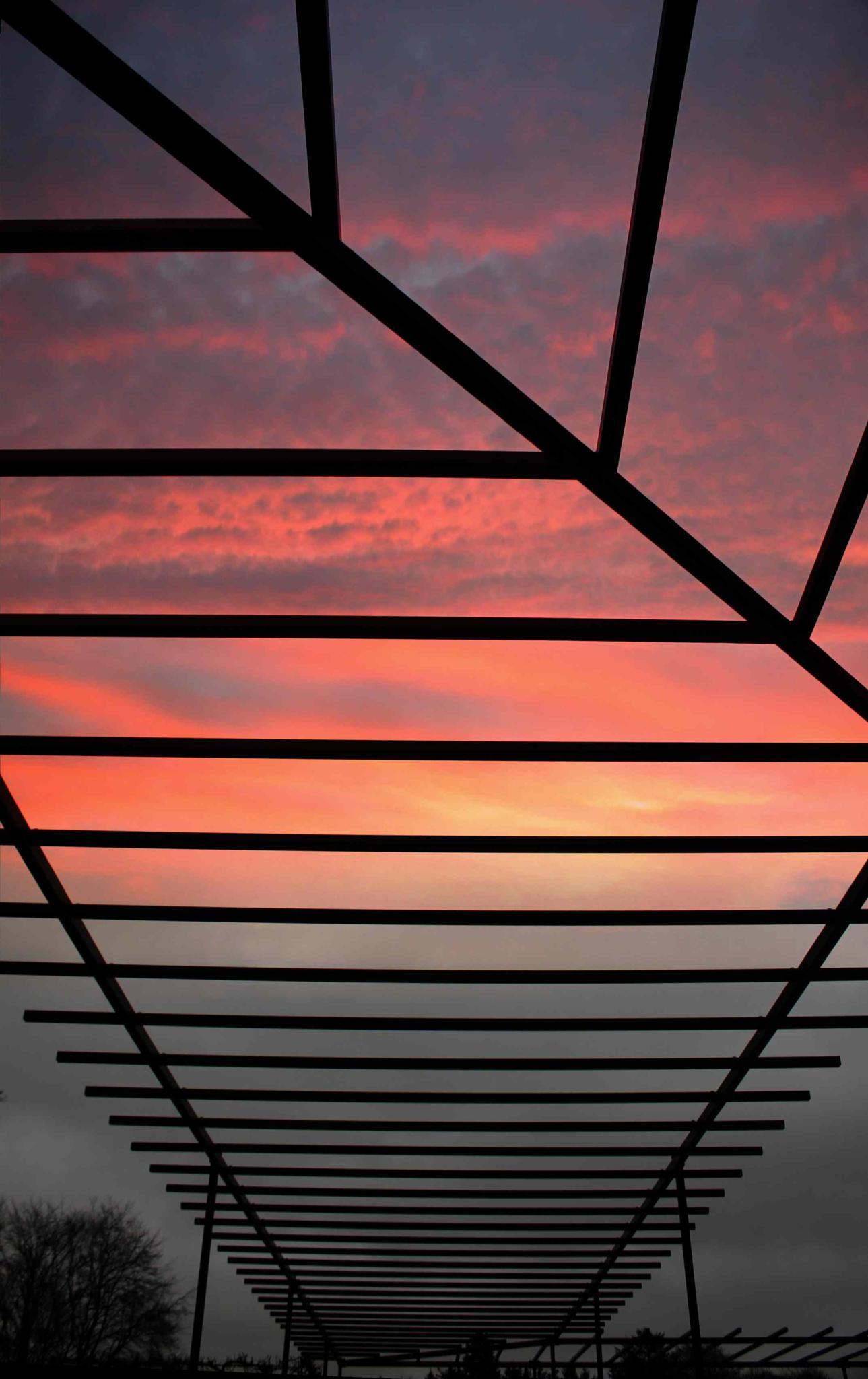 51 Sky through trellis by Steve Walsh ( Laird of Dunans )