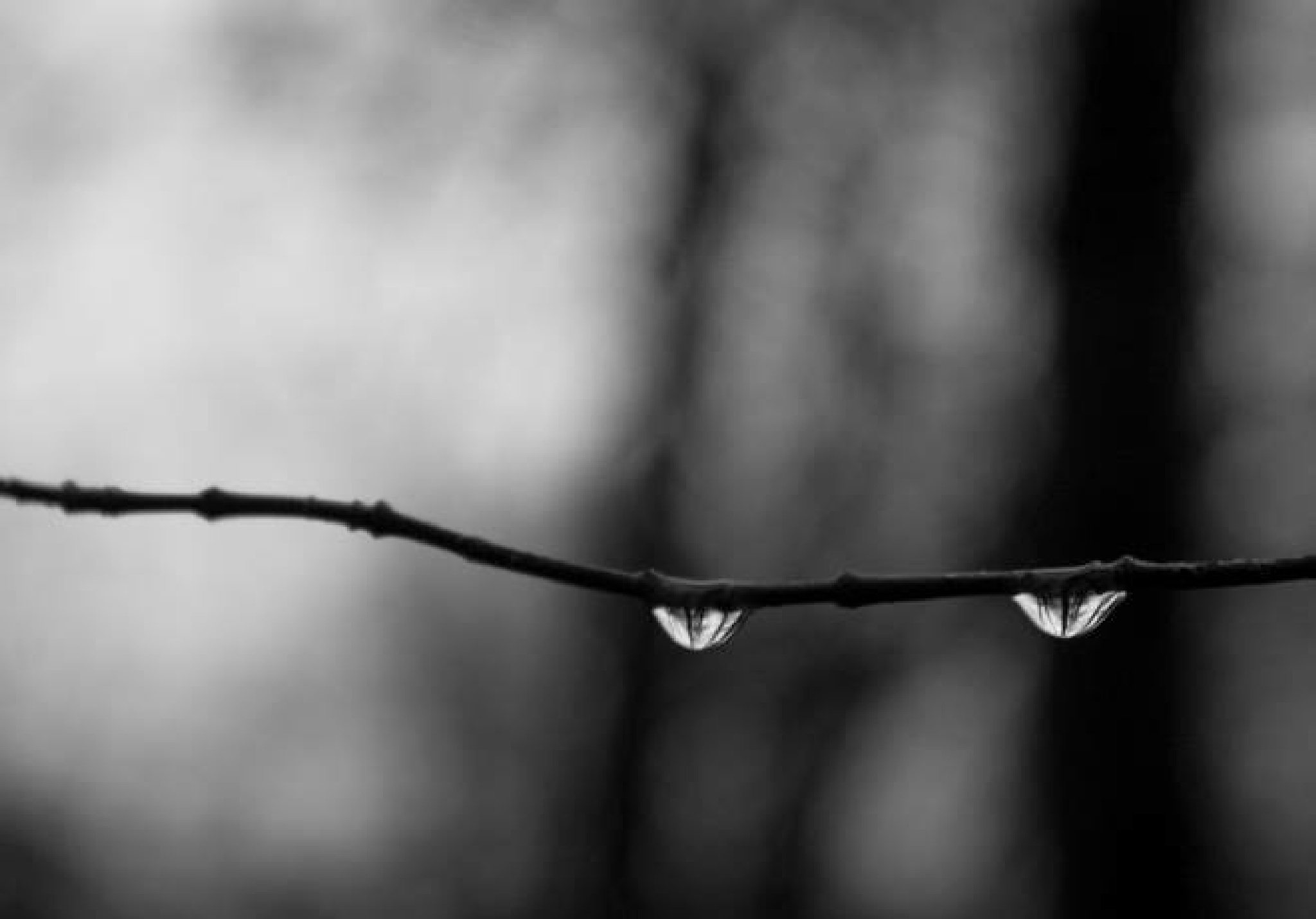 Two tears by m.cozzutti