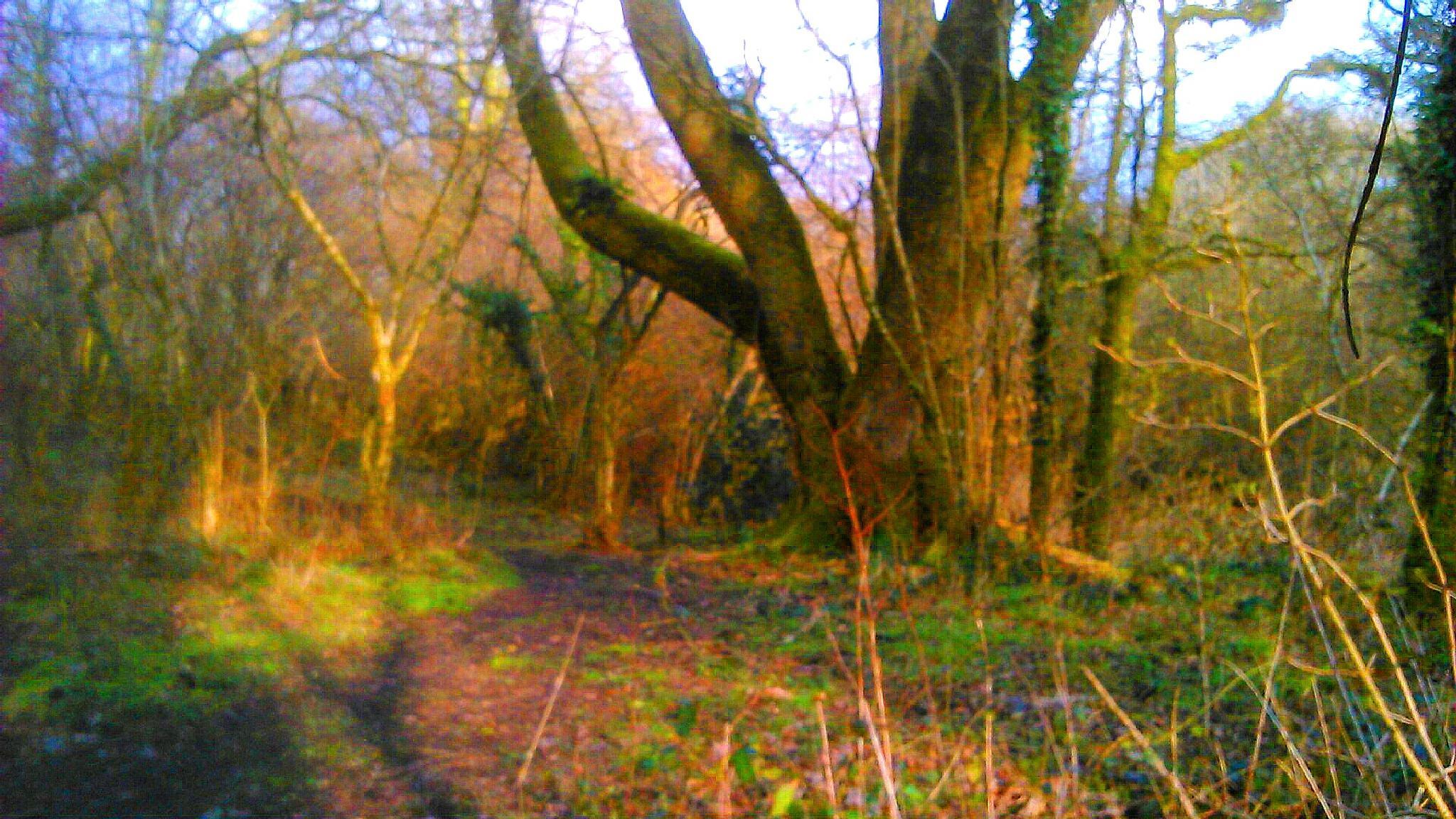 in the woods  by Darren jones