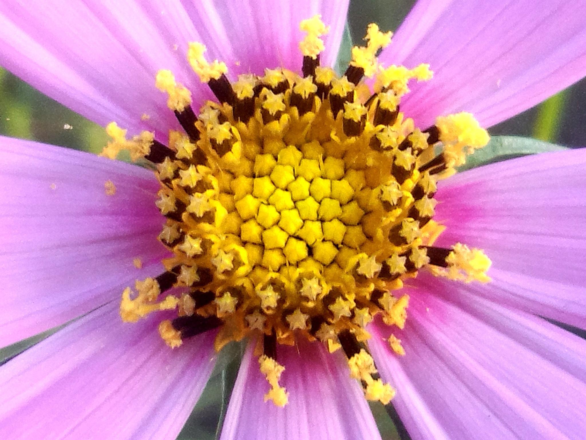 pollen by takuya.murata.14