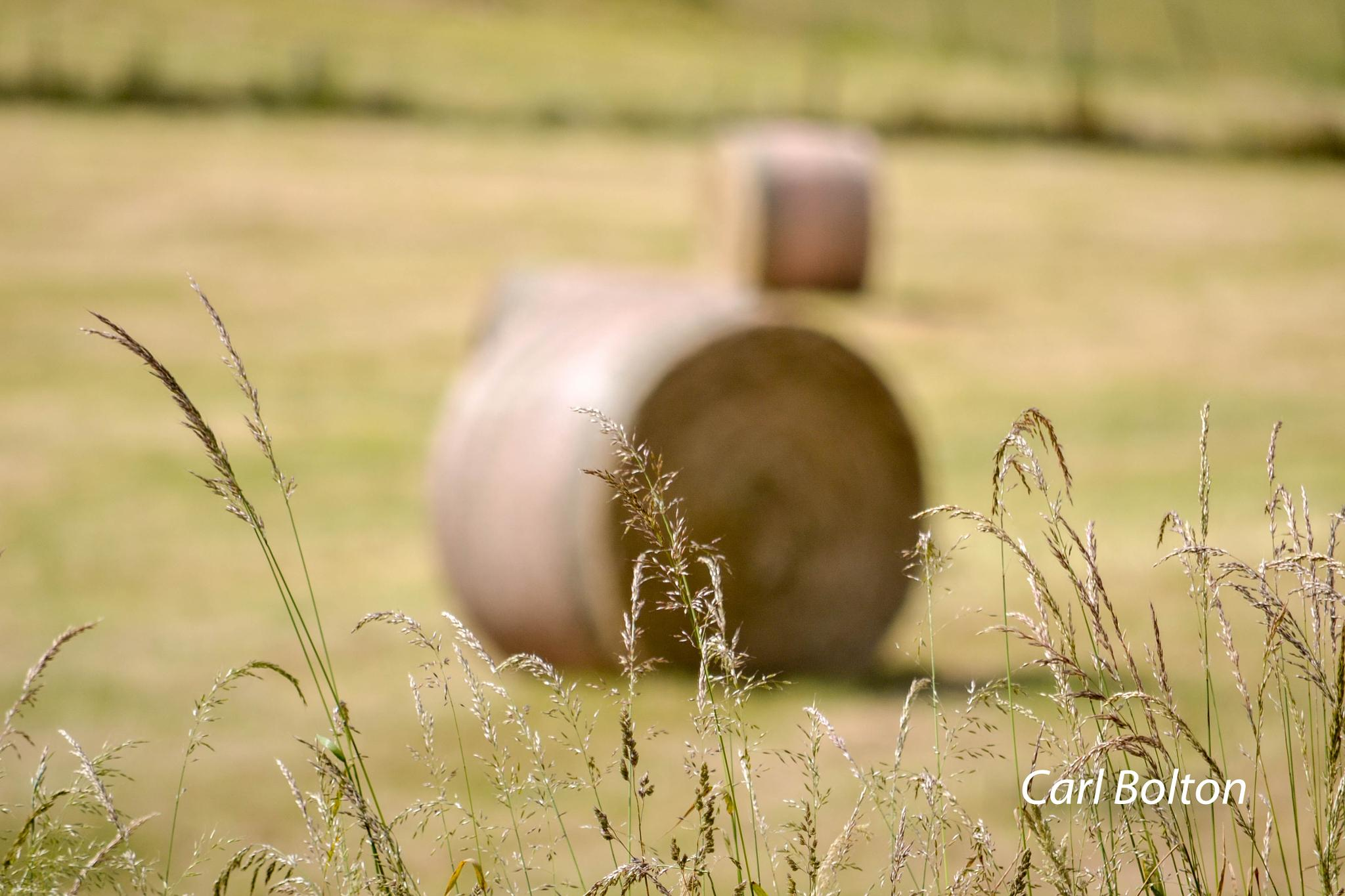 Hay Bales by carl.bolton.5