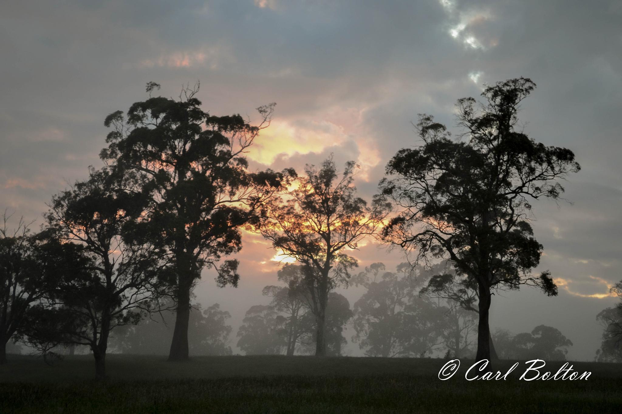 Photo in Landscape #sunrise #fog #trees