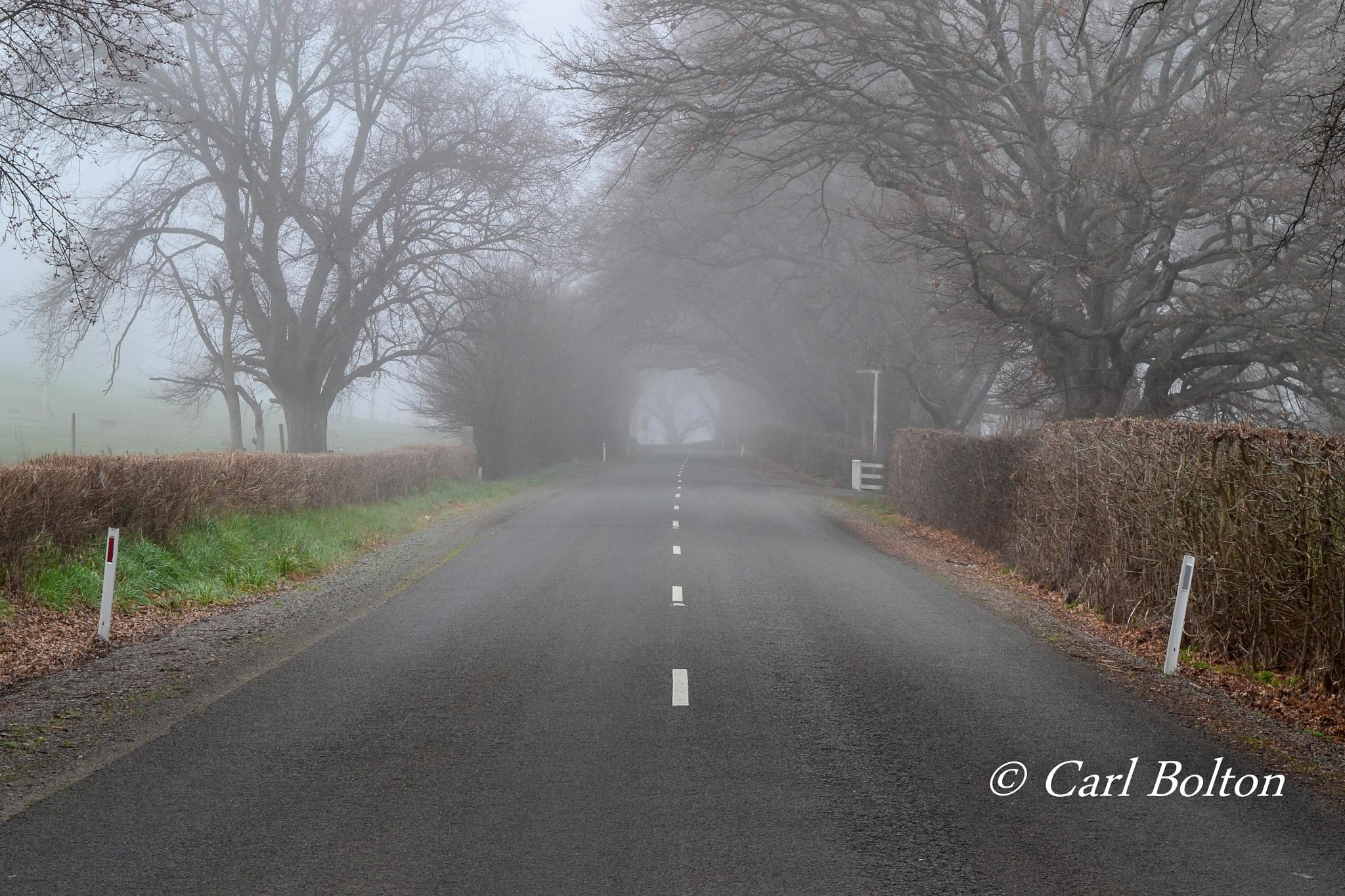 Photo in Landscape #fog #tree #road #tunnel