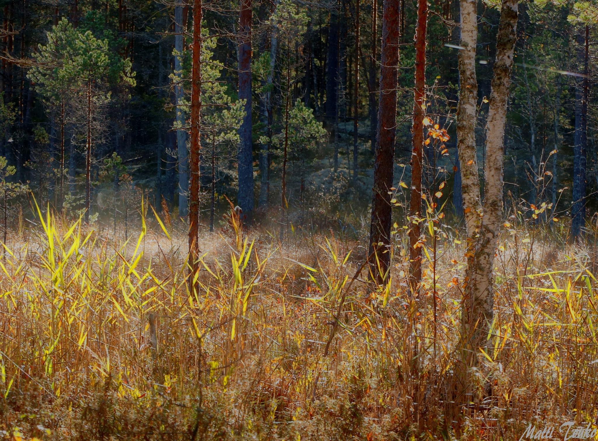 beautiful autumn by Matti Touko