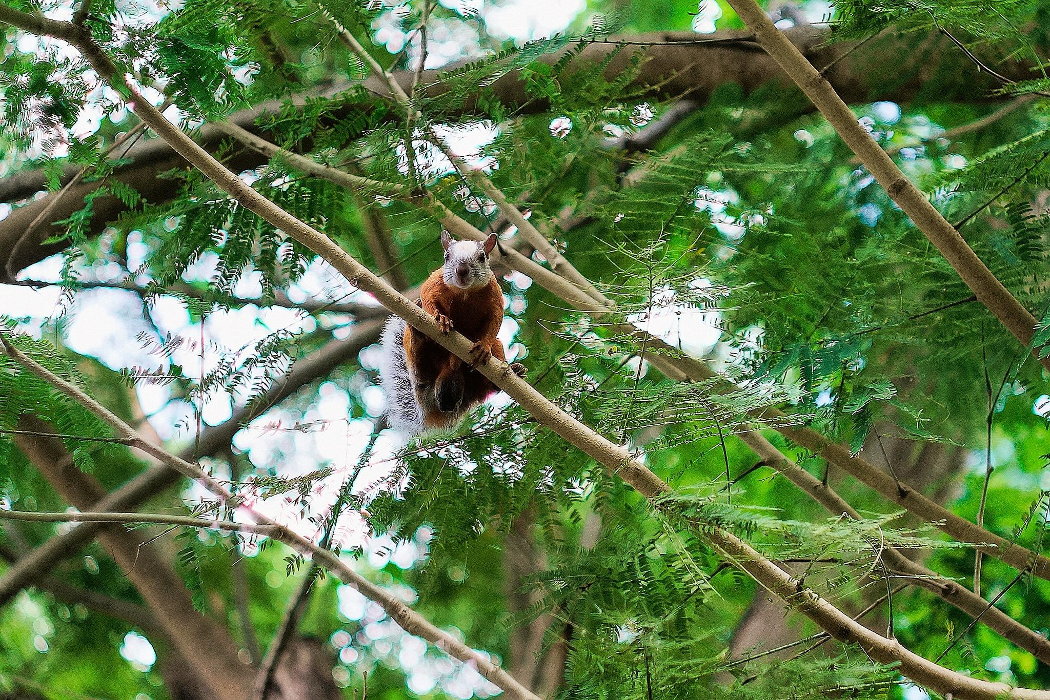 Squirrel in my Garden by Smilin' Dog