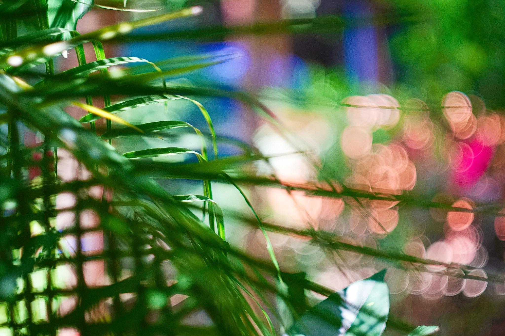 Palms, Tropical Light & Bokeh by Smilin' Dog