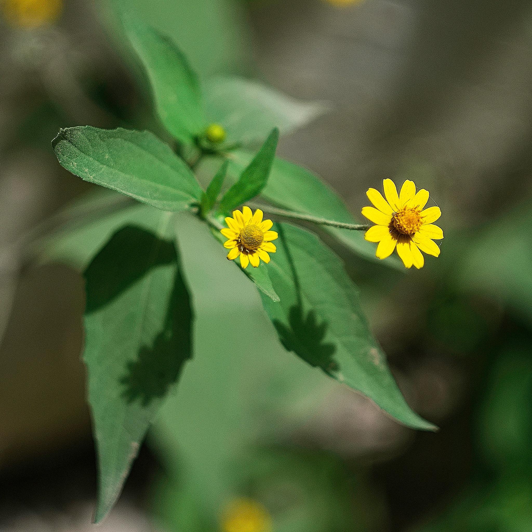 Little Wild Flower by Smilin' Dog