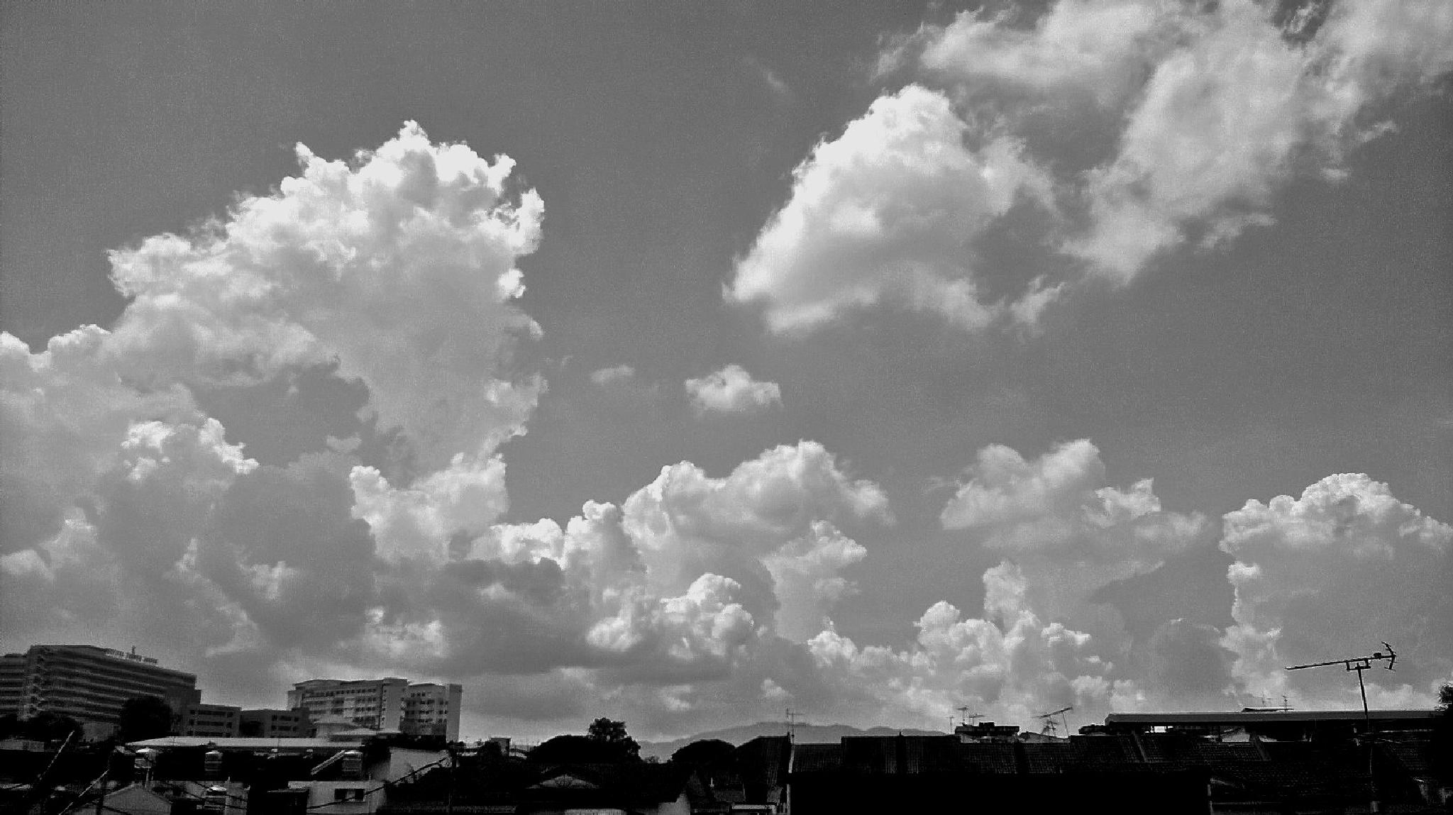 Photo in Black and White #nature #b&w #malaysia