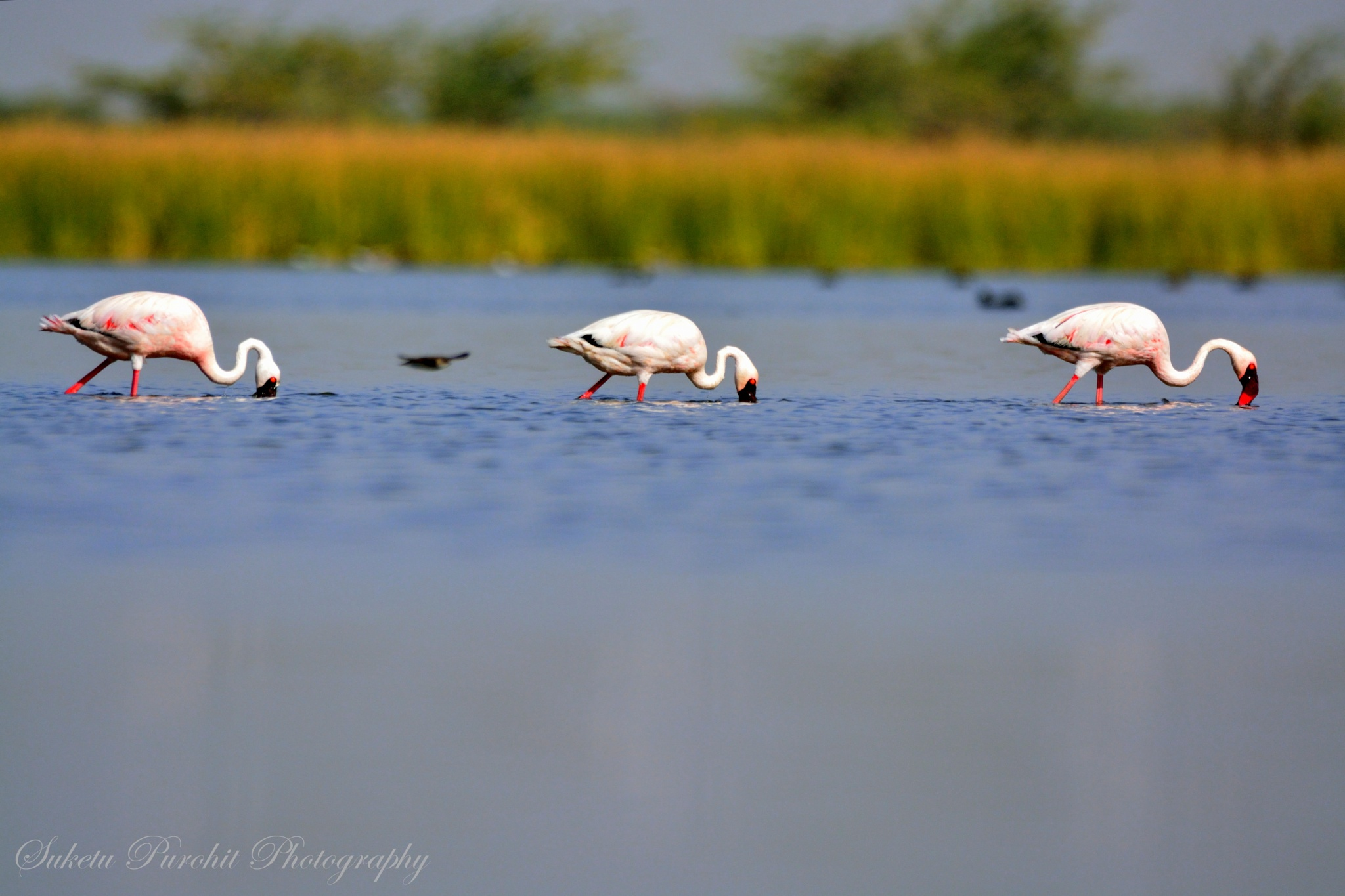 In Search of food !!! by Suketu Purohit
