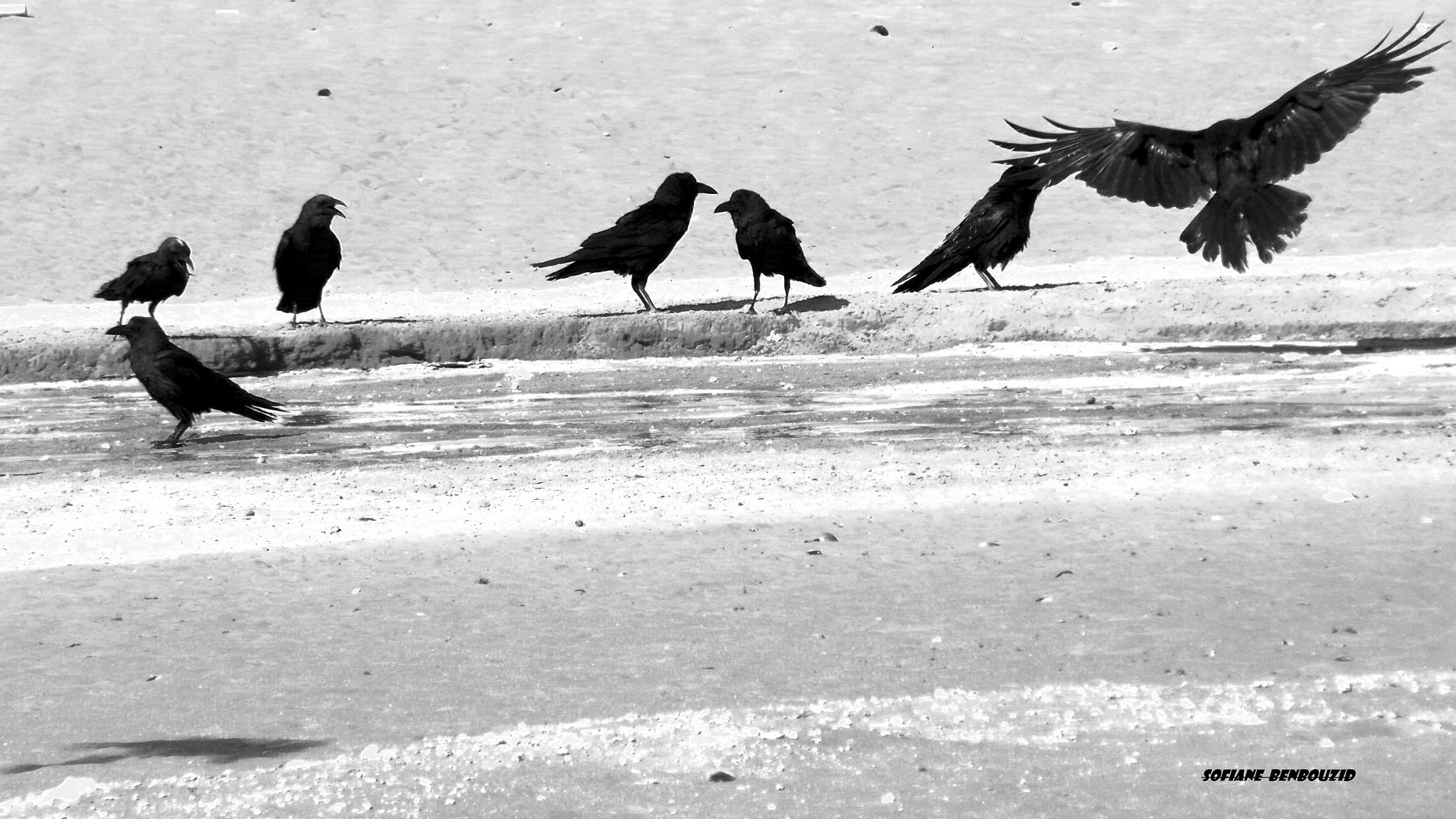 Crows Crew by sofiane Benbouzid