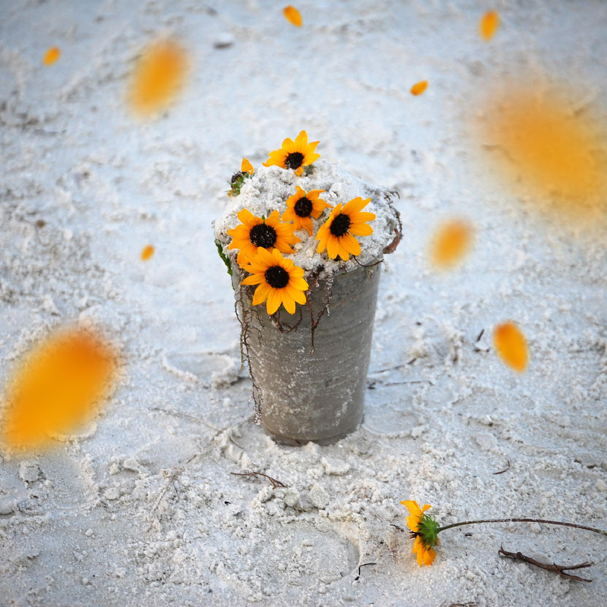 Yellow Flowers on the sand by mrjsbelieve