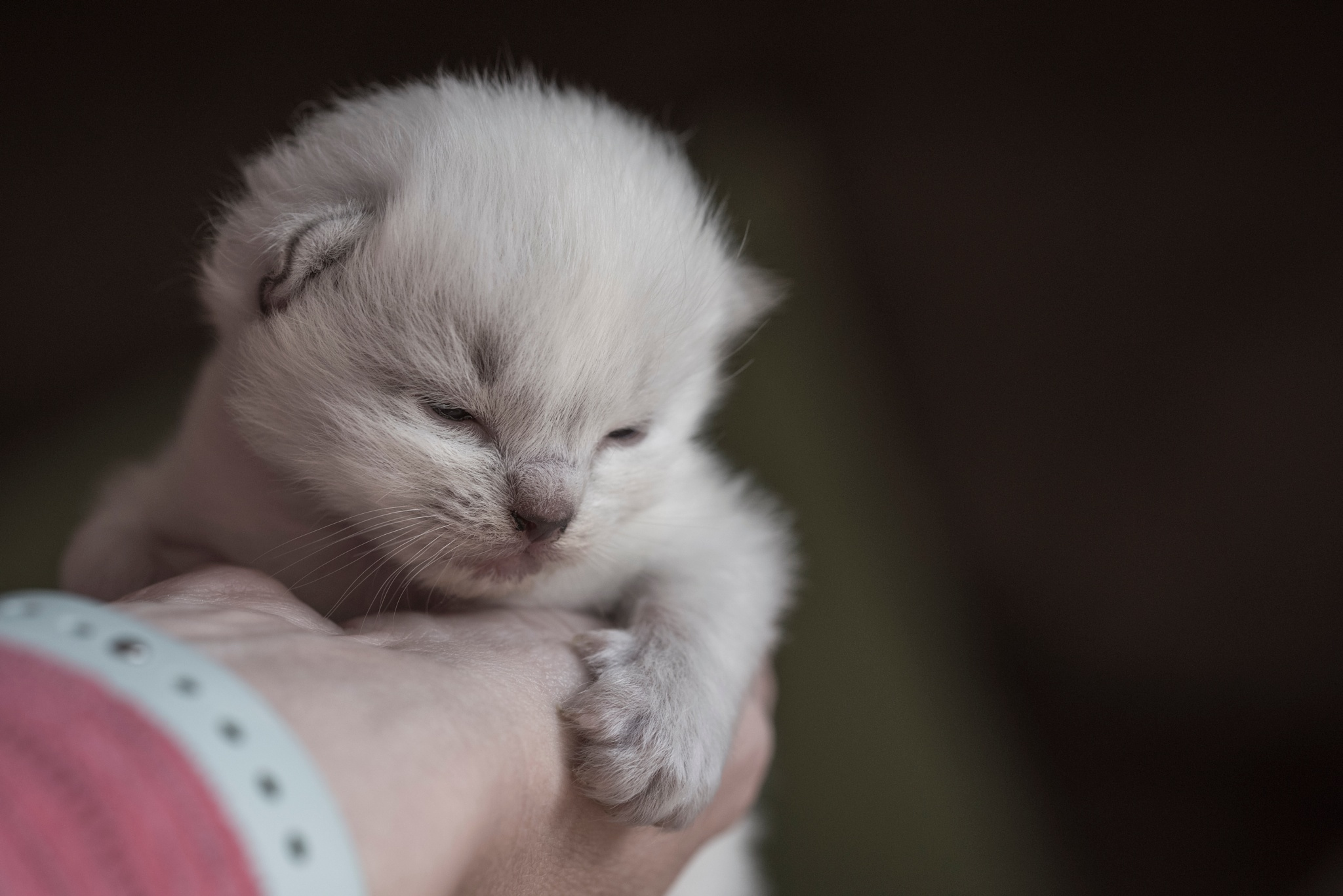 Cutie by LouiseKaye