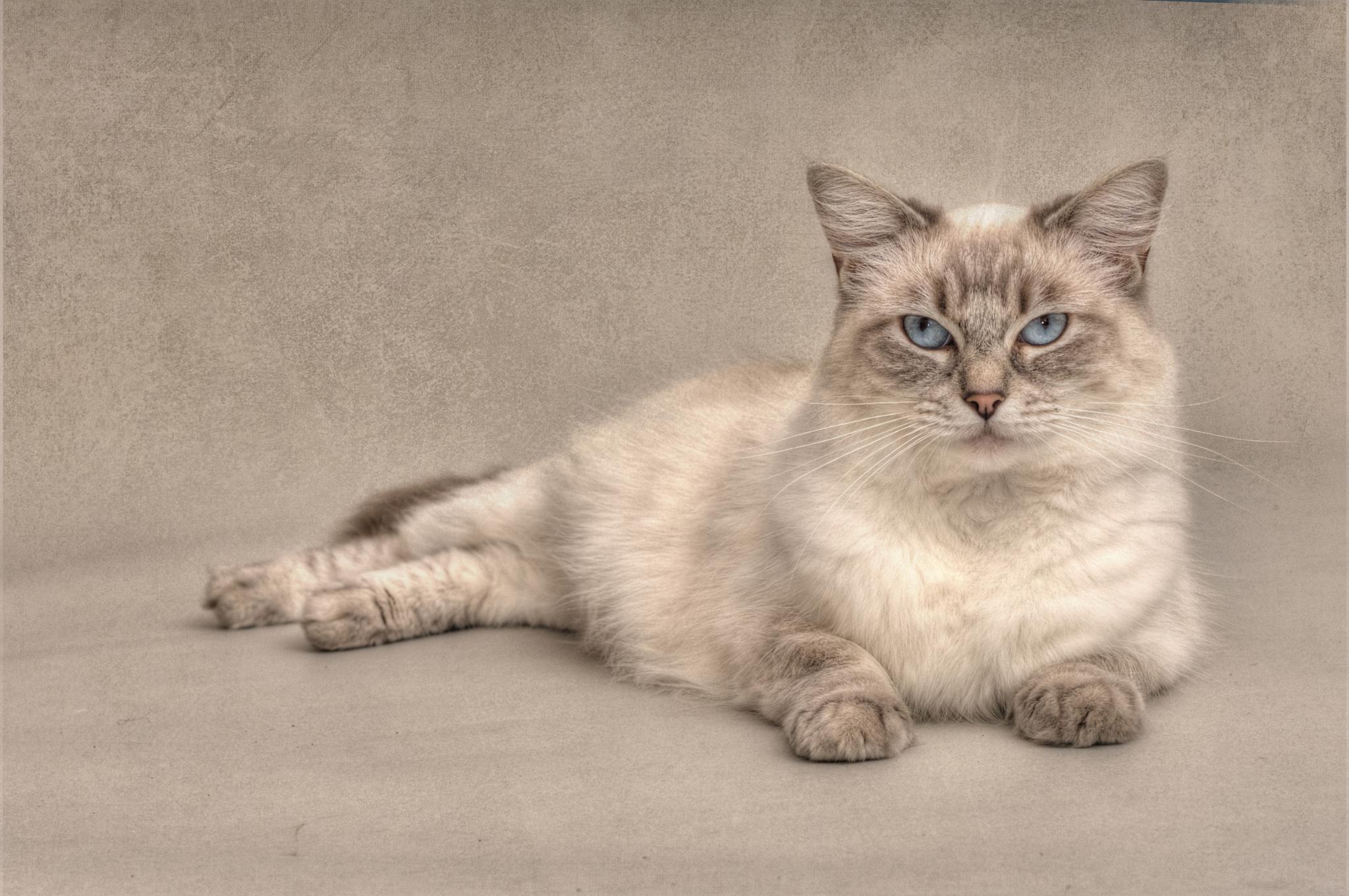 Lazy Kitty by LouiseKaye