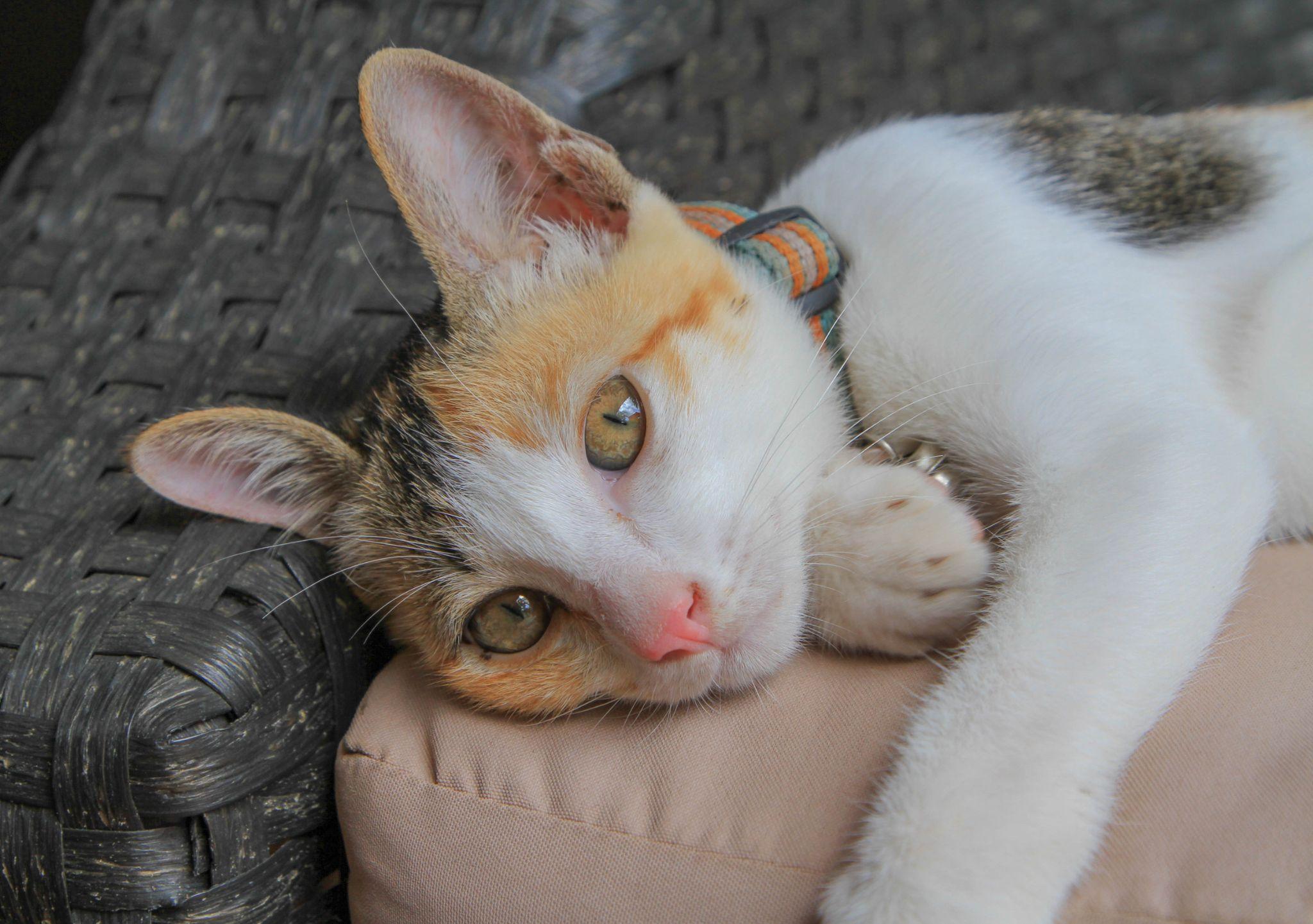 Is My Kitten a Poser lol by Lloyd de Gruchy