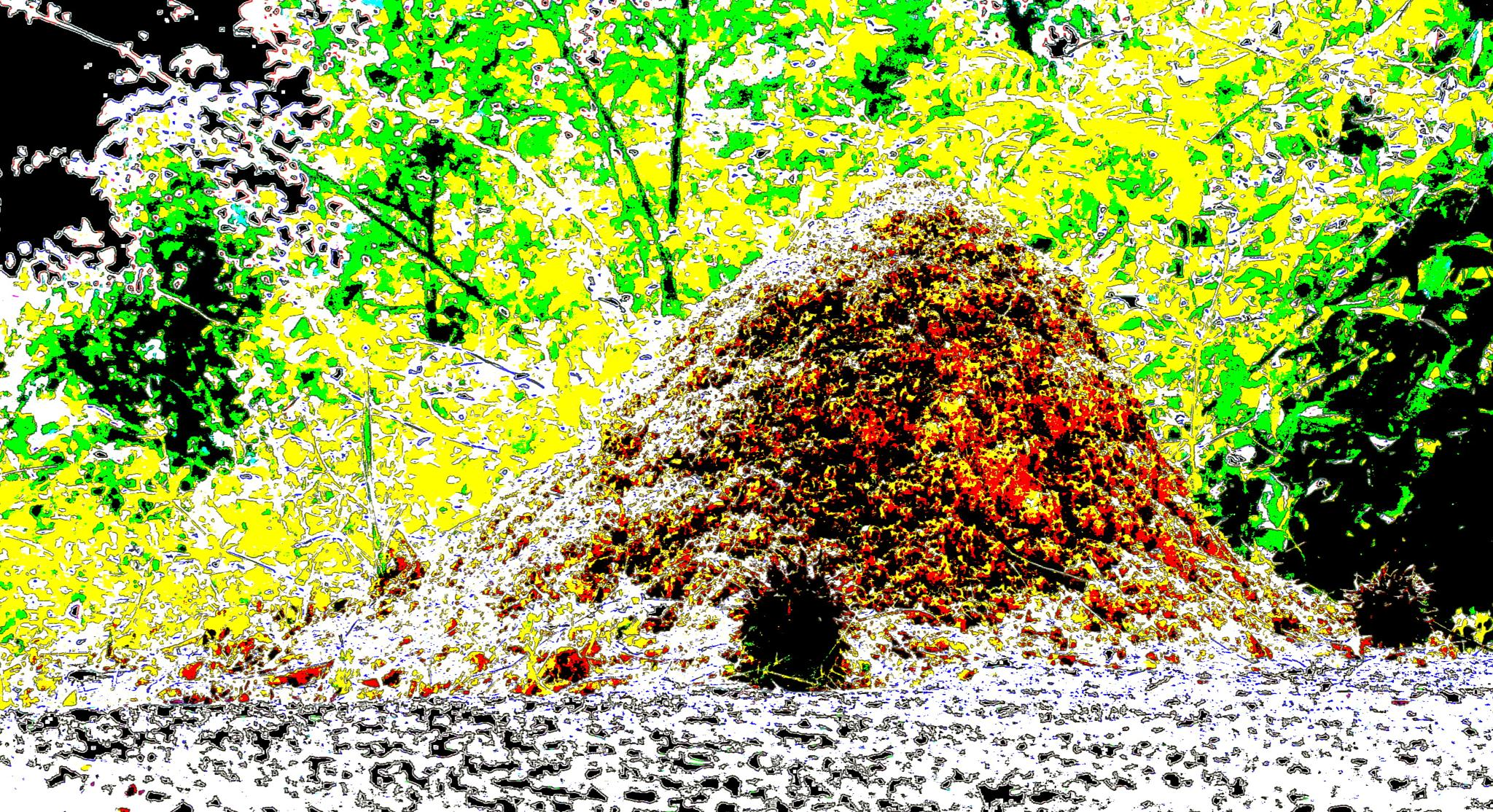 Ant Hill by Zany Dee