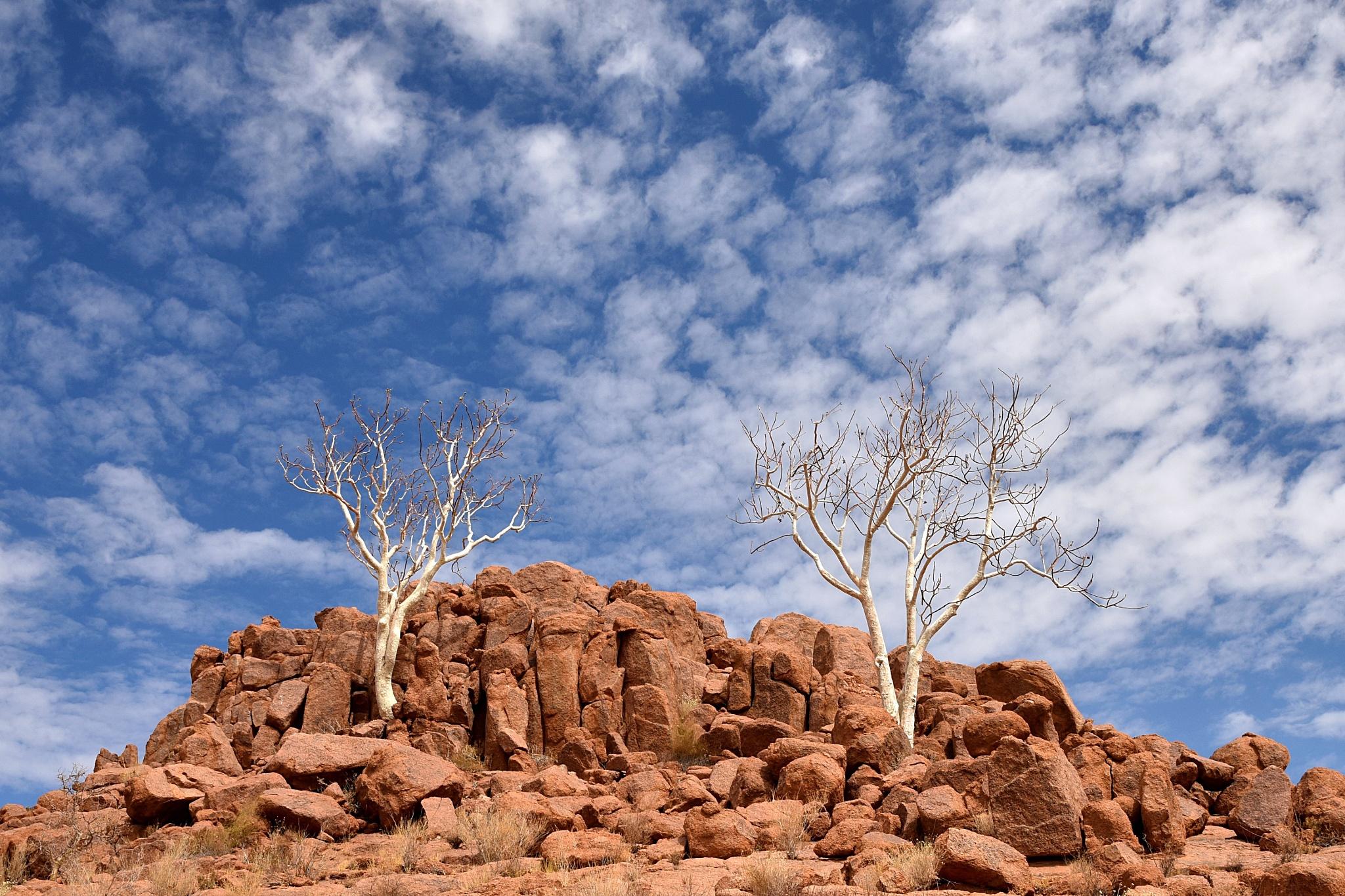 Desert Solitude by craig.gissing