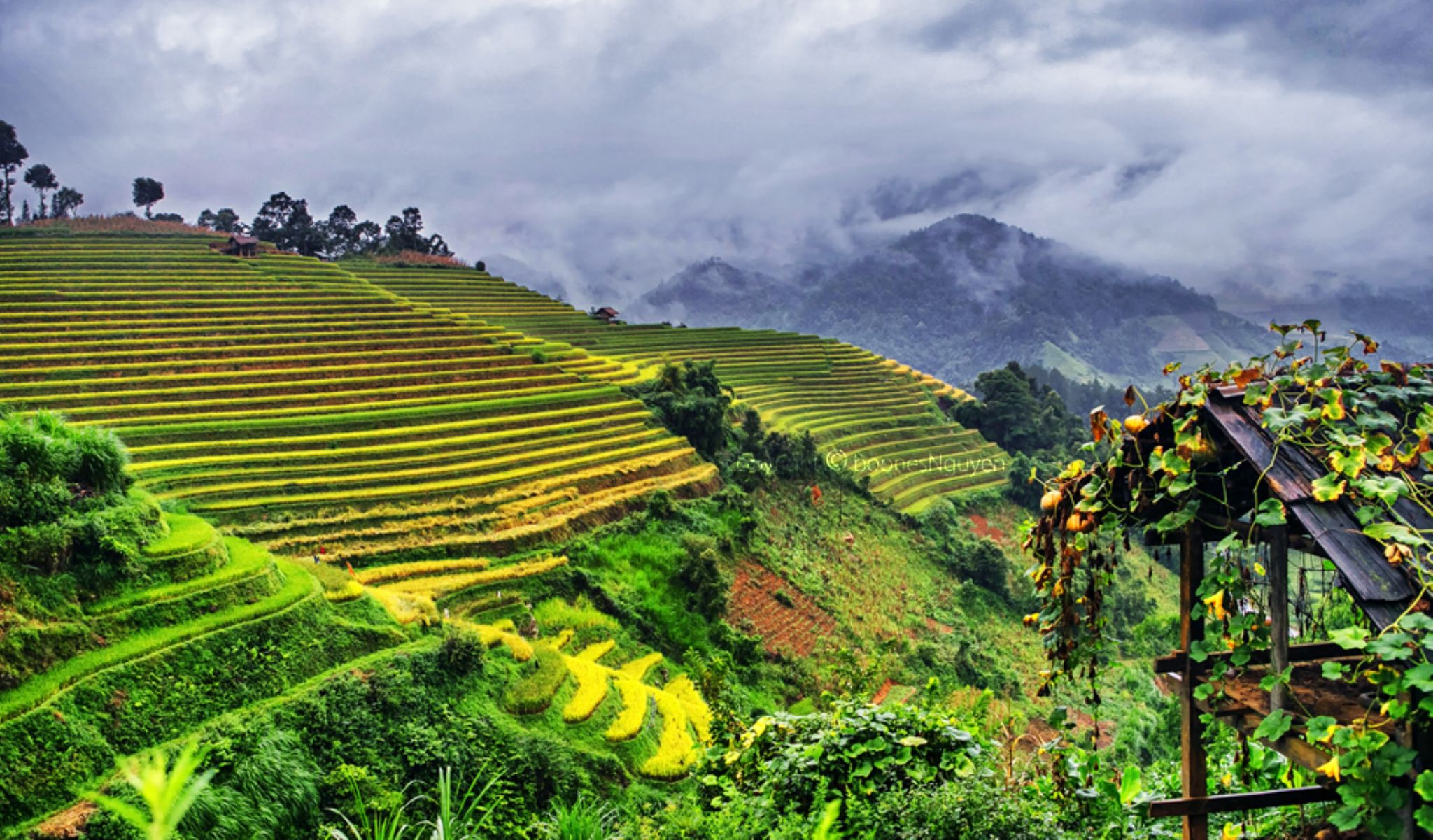 Rainy day on terraced rice field by Boones Nguyen