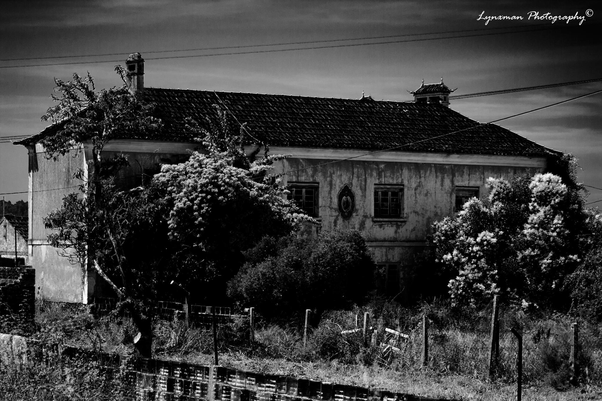 Black & White by lynxmanphotography