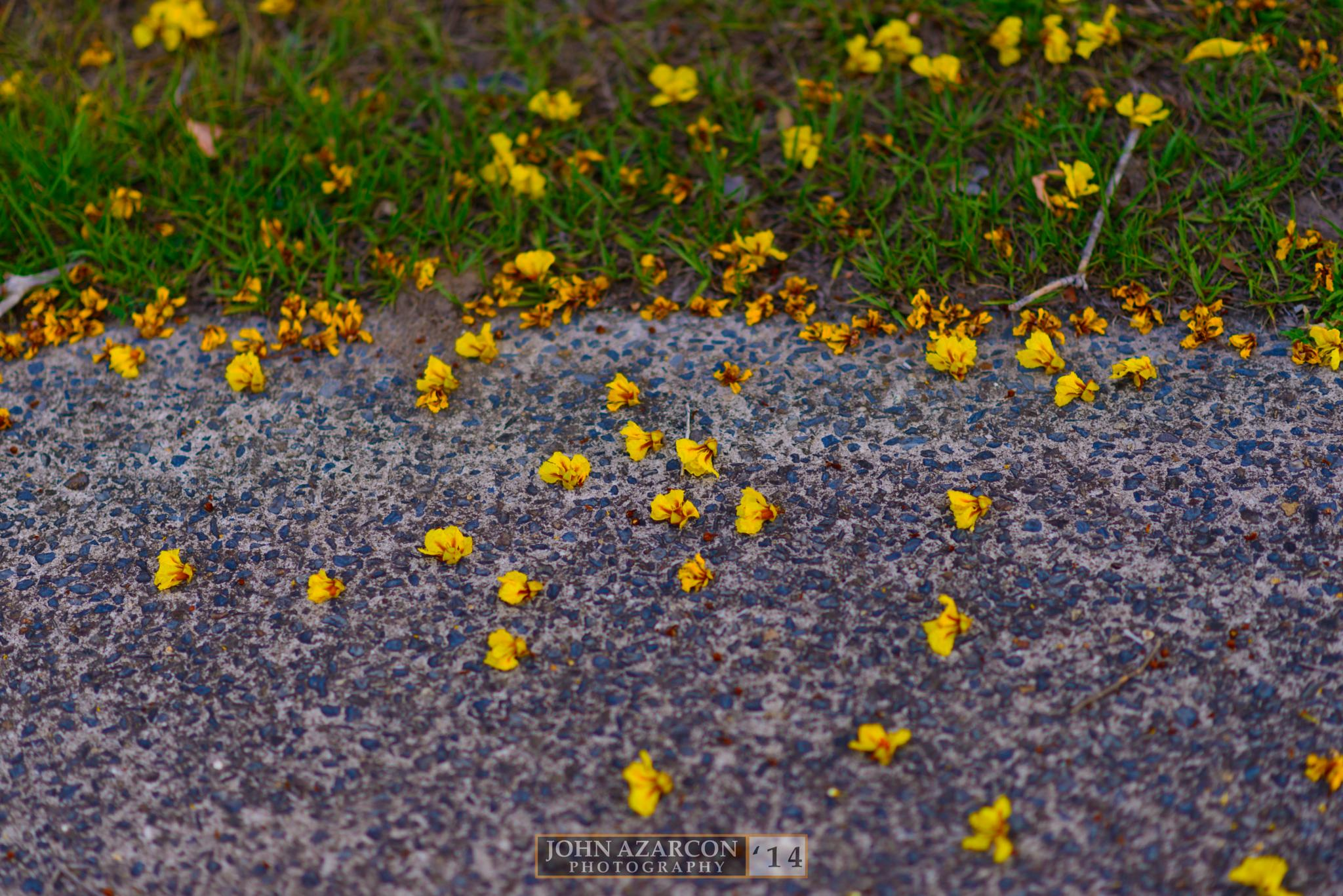 Photo in Nature #flowers #footpath #buildup #grass #topend #nt