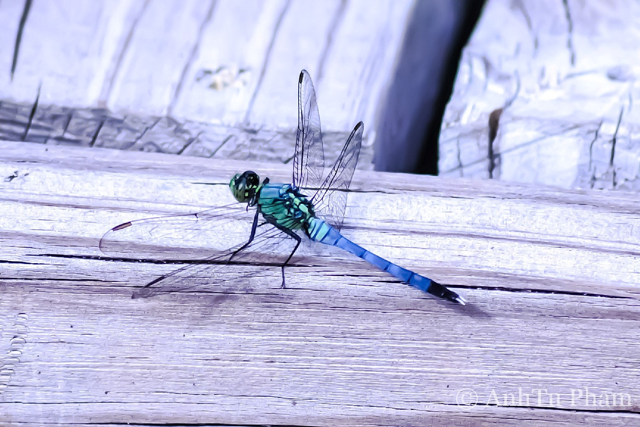 Colorful Dragonfly by phamtuanh.thi