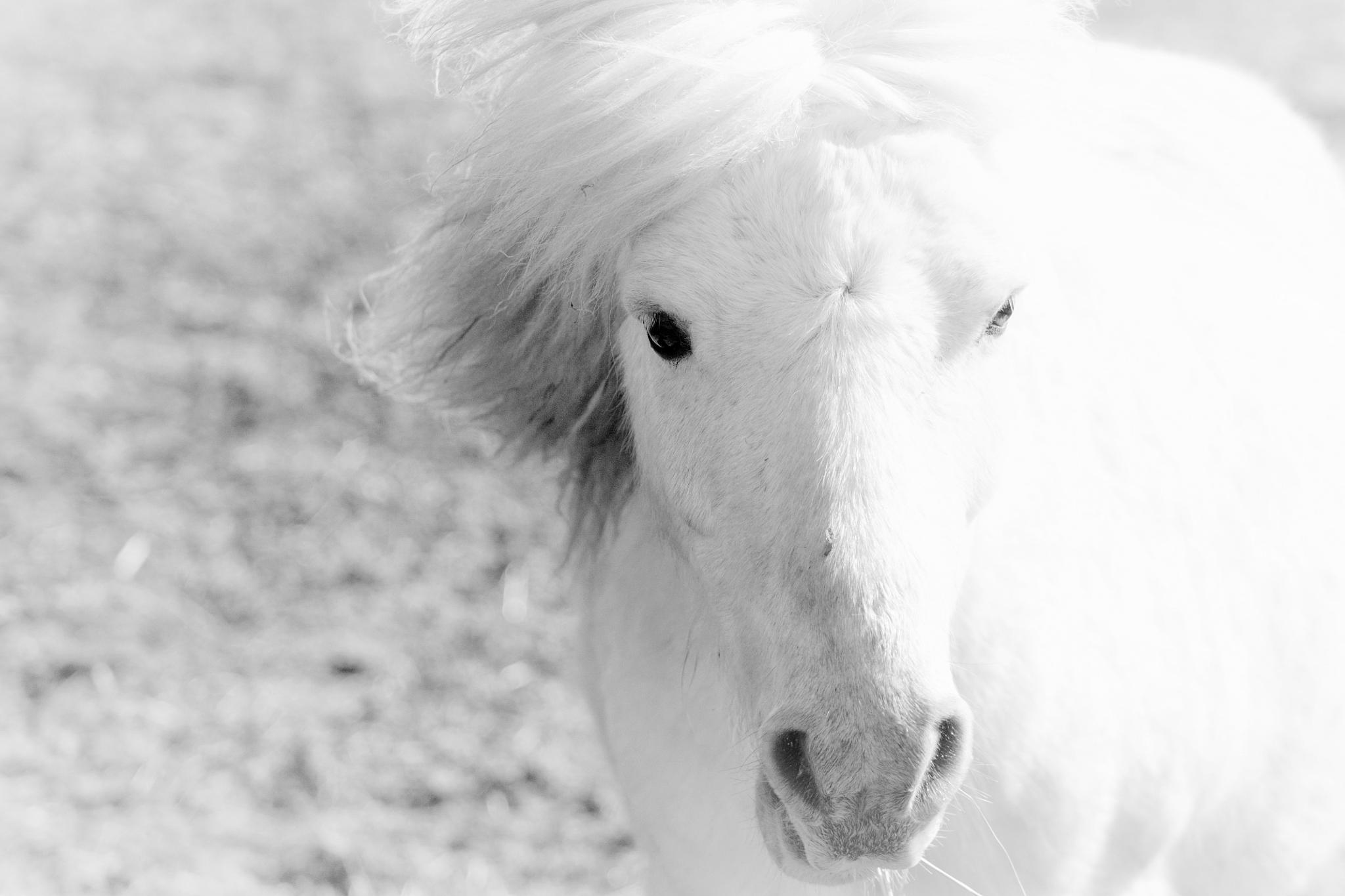 White by kajen746