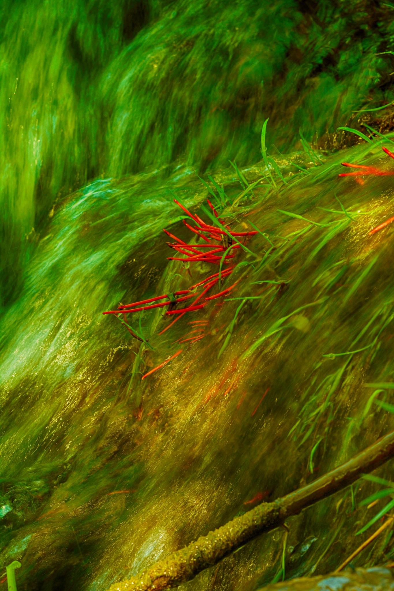 Red Sticks by kajen746