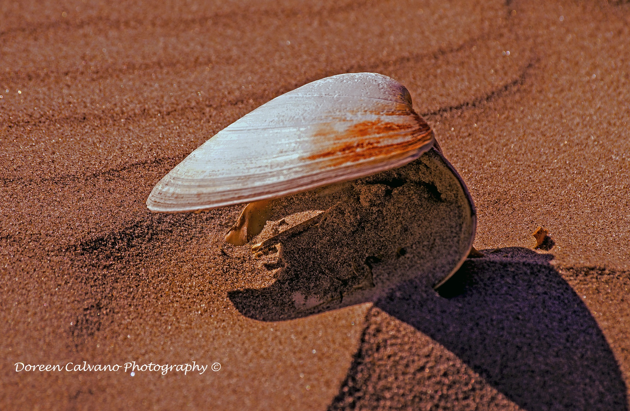 Ripples in the Sand by doreen.c.calvano