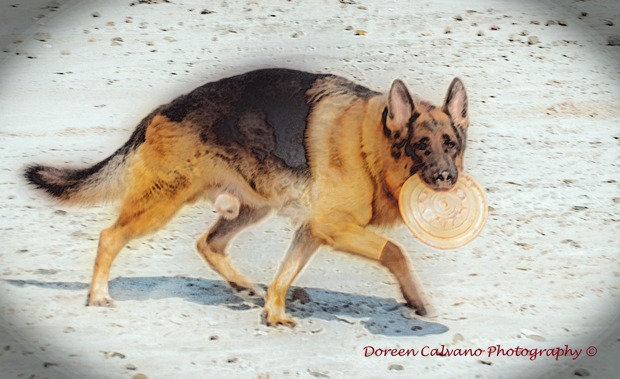German Shepherd ~ Using Special Effects by doreen.c.calvano