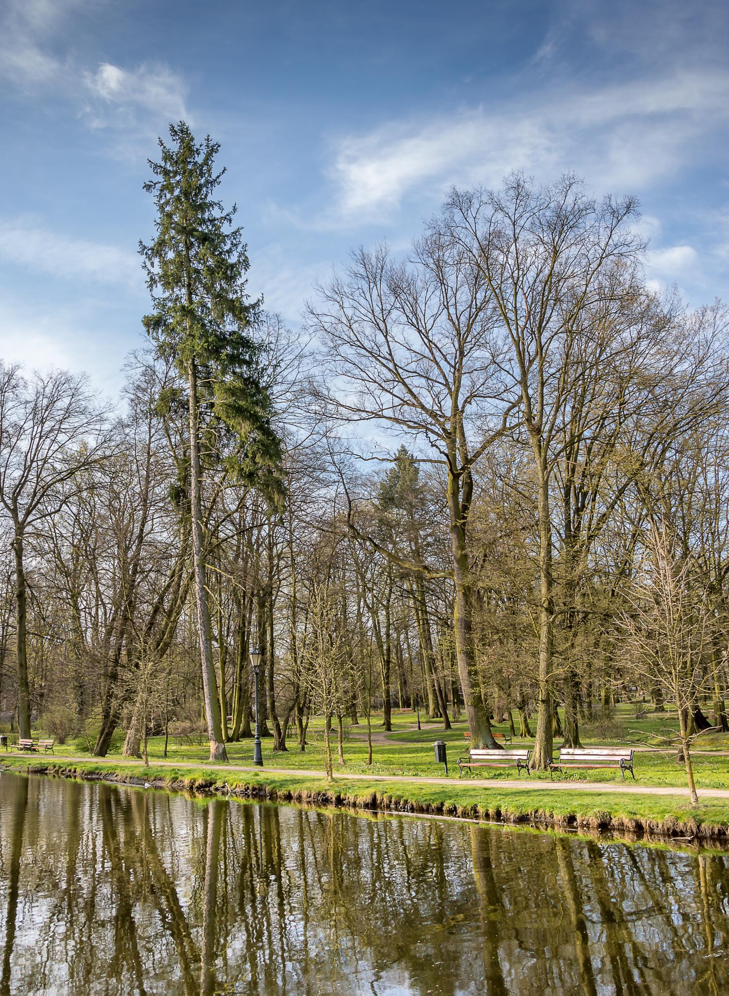Wysokie drzewo... by Cezary Szajdak