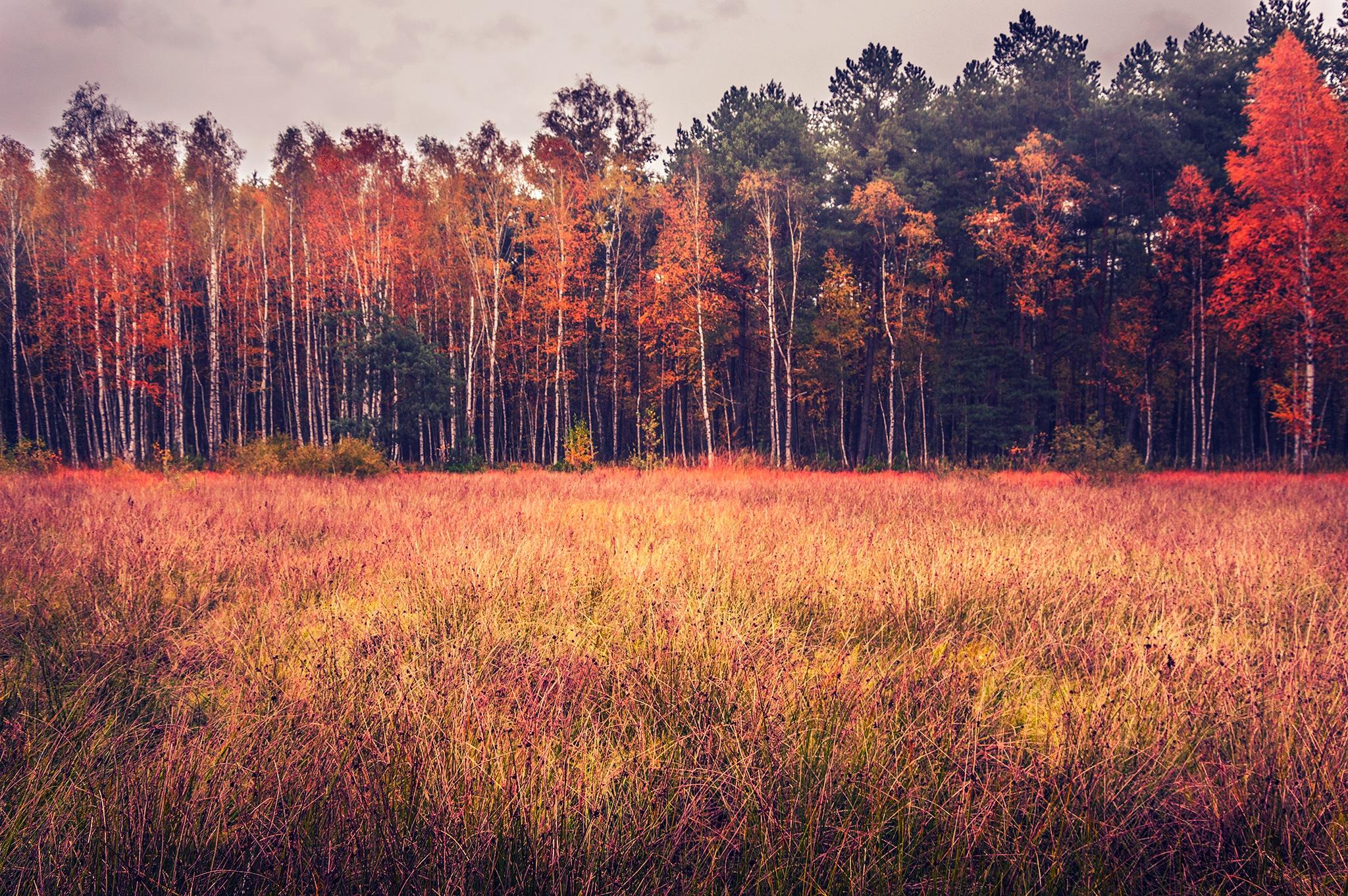 Jeszcze jedno zdjęcie z lasu... by Cezary Szajdak