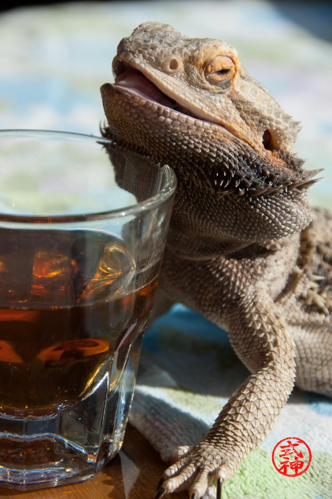 Photo in Random #iza #bearded dragon #lizard #drinking #humor